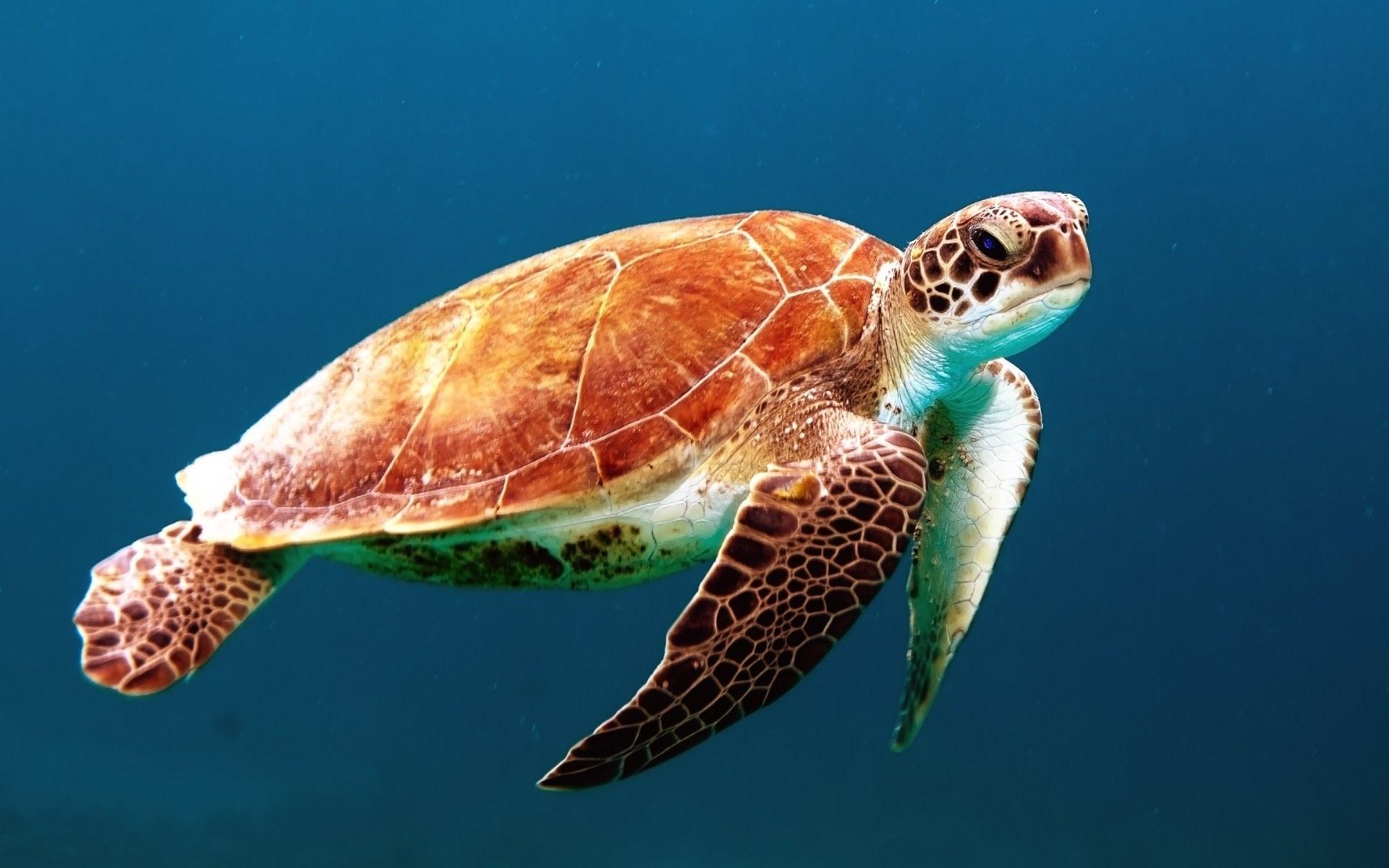 животные живущие в океане в картинках маленькая площадь многом