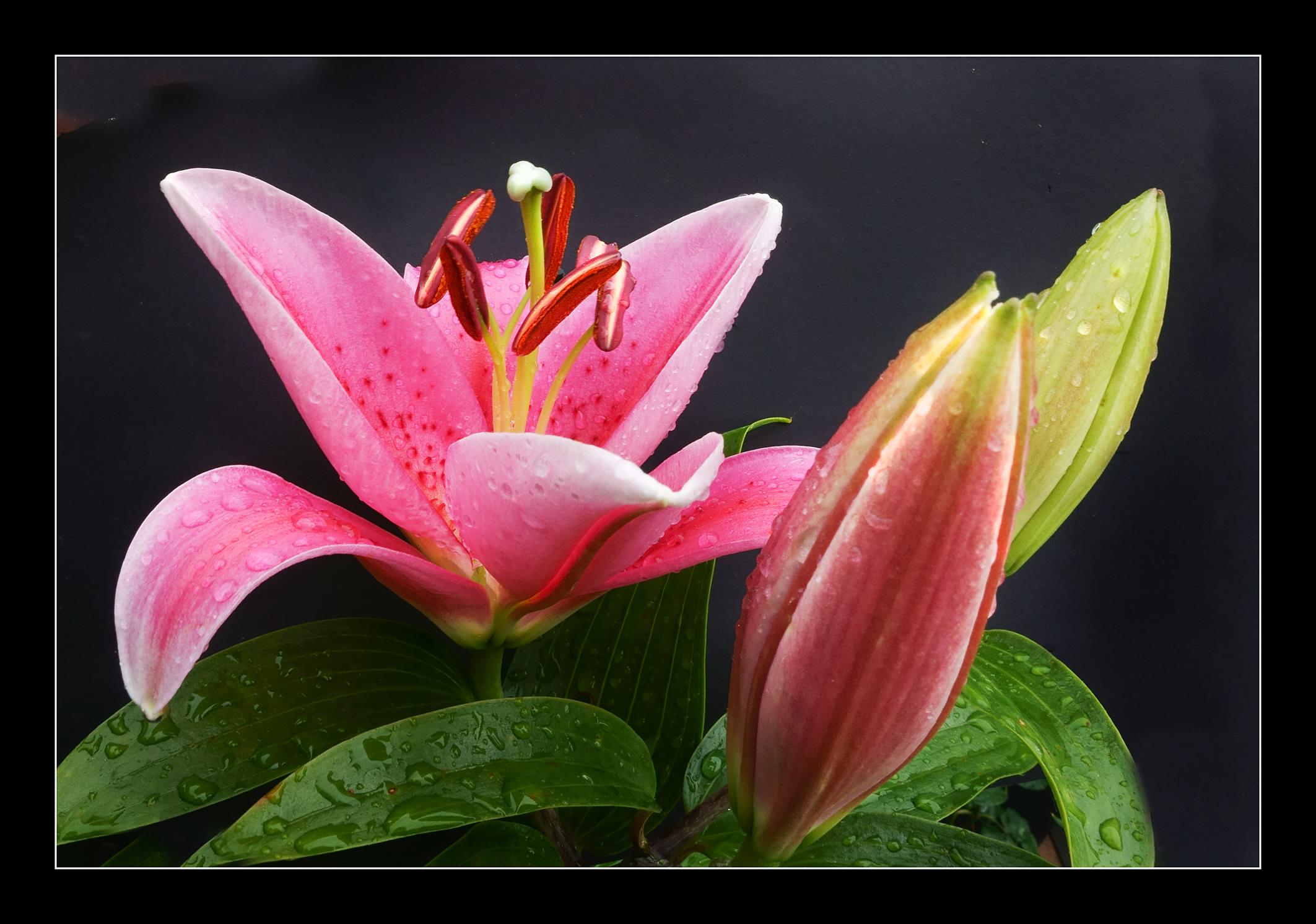 Free Images : open, flower, purple, petal, bloom, dark, green, color ...
