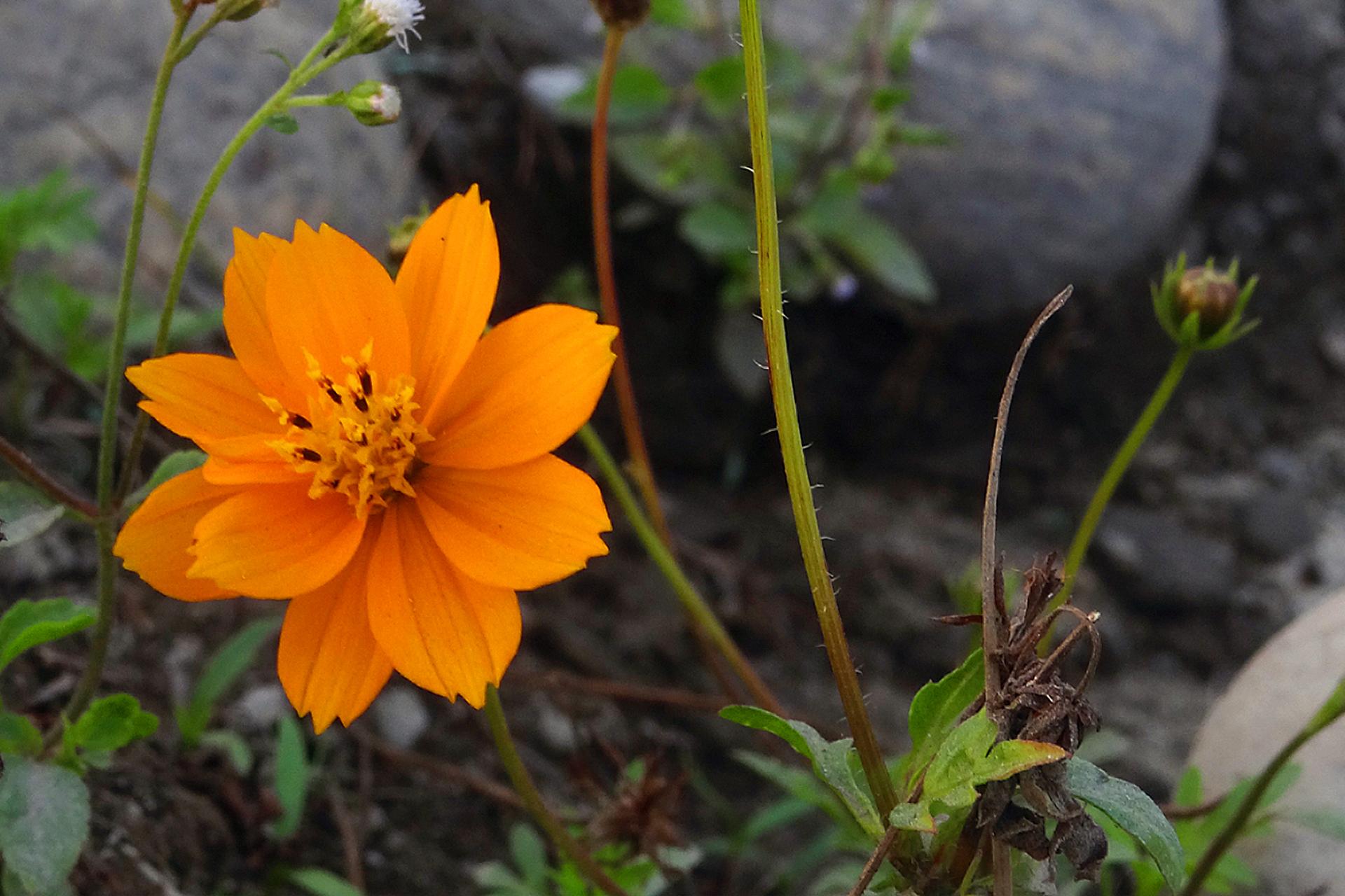 Free Images Orange Flower Flowering Plant Petal Yellow