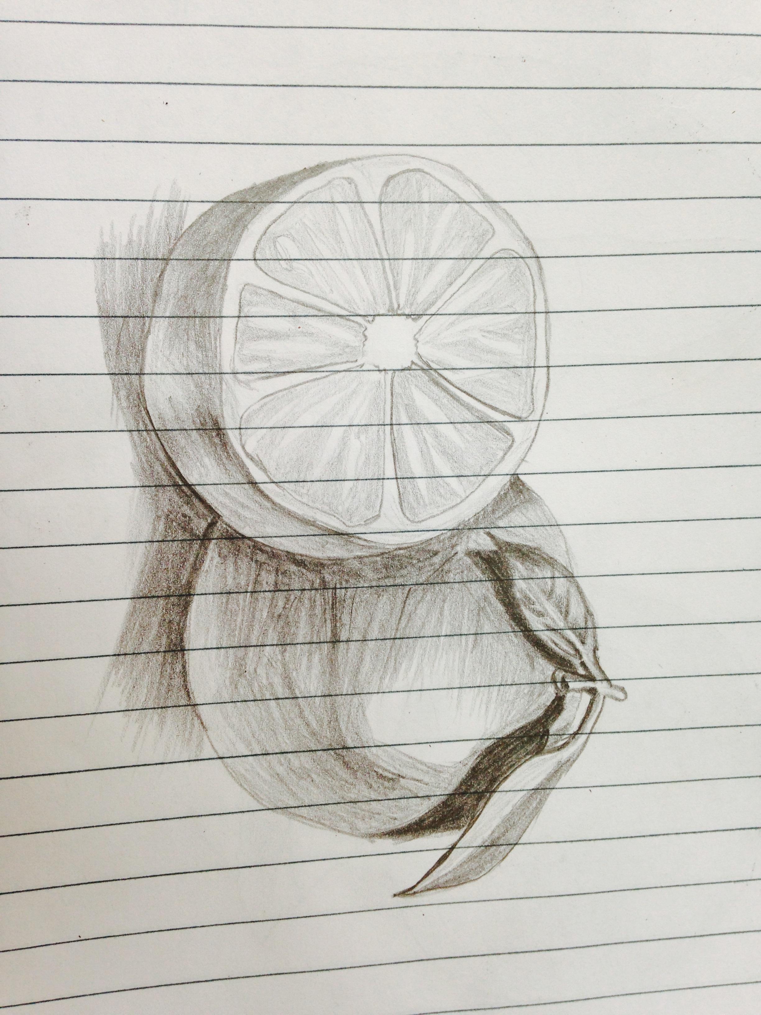 Gambar Jeruk Pola Garis Lingkaran Karya Seni Sketsa
