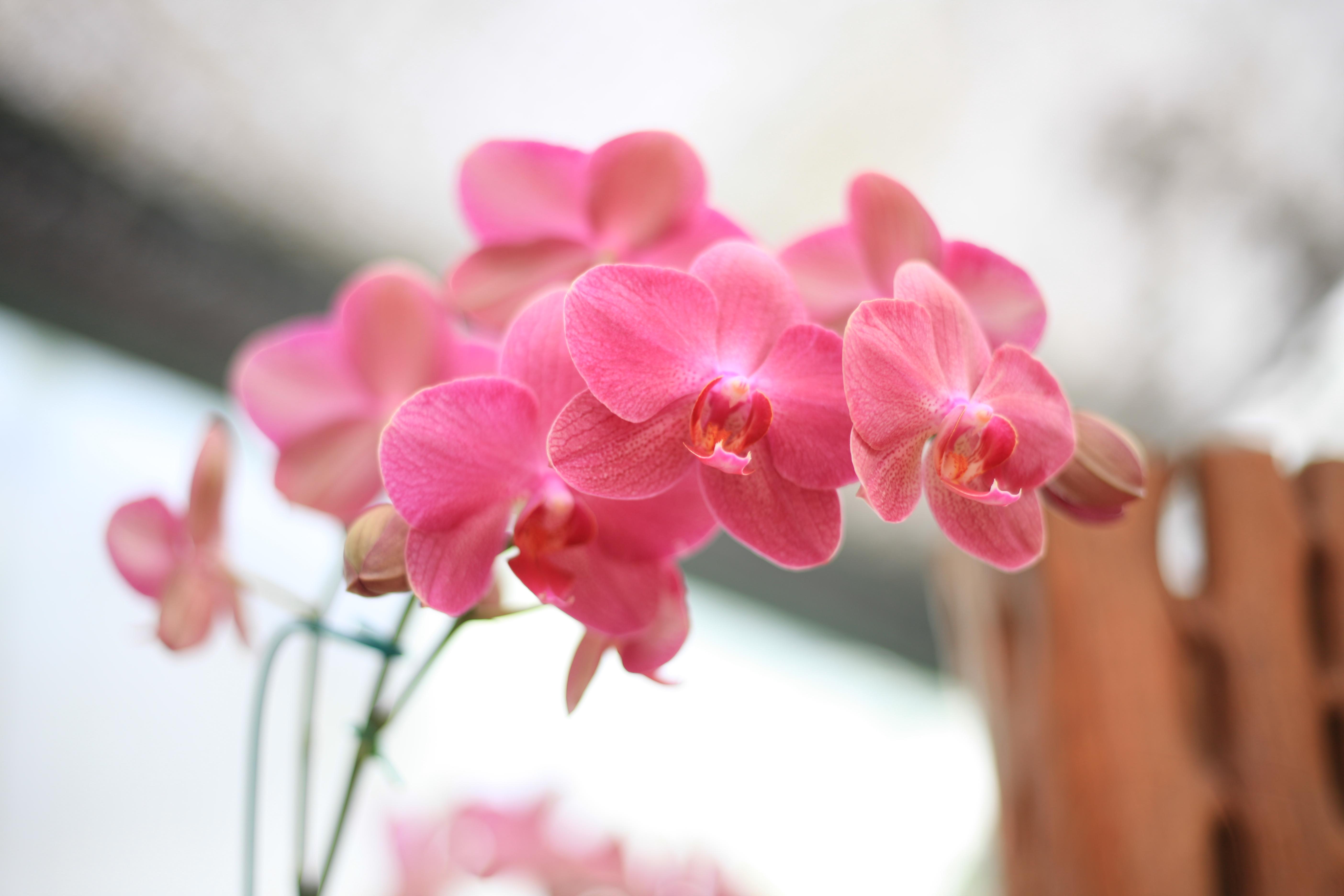 foto de Images Gratuites : rose, pétale, plante à fleurs, printemps ...