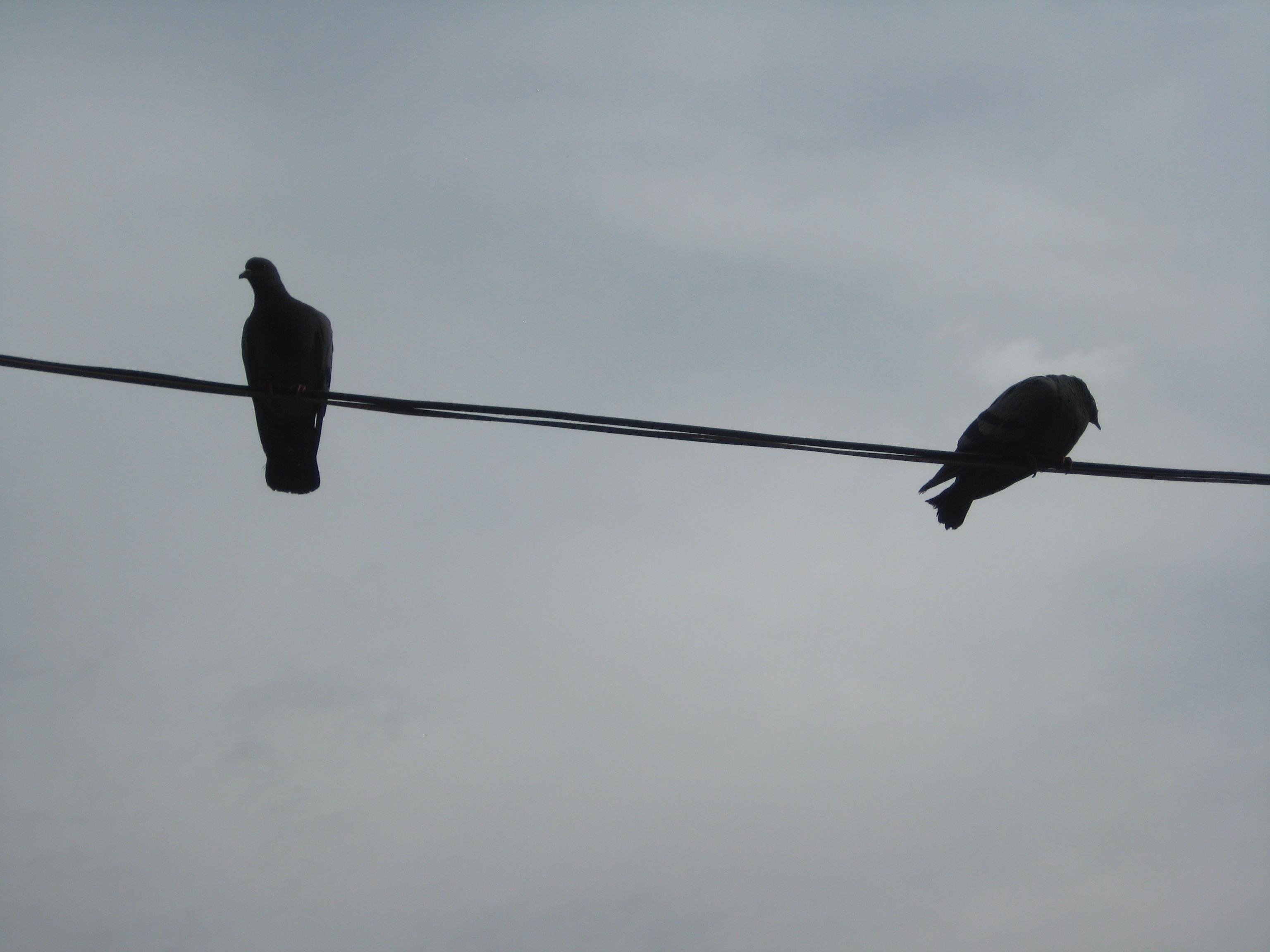 Free Images : outdoor, wing, wildlife, wild, beak, biology, flight ...
