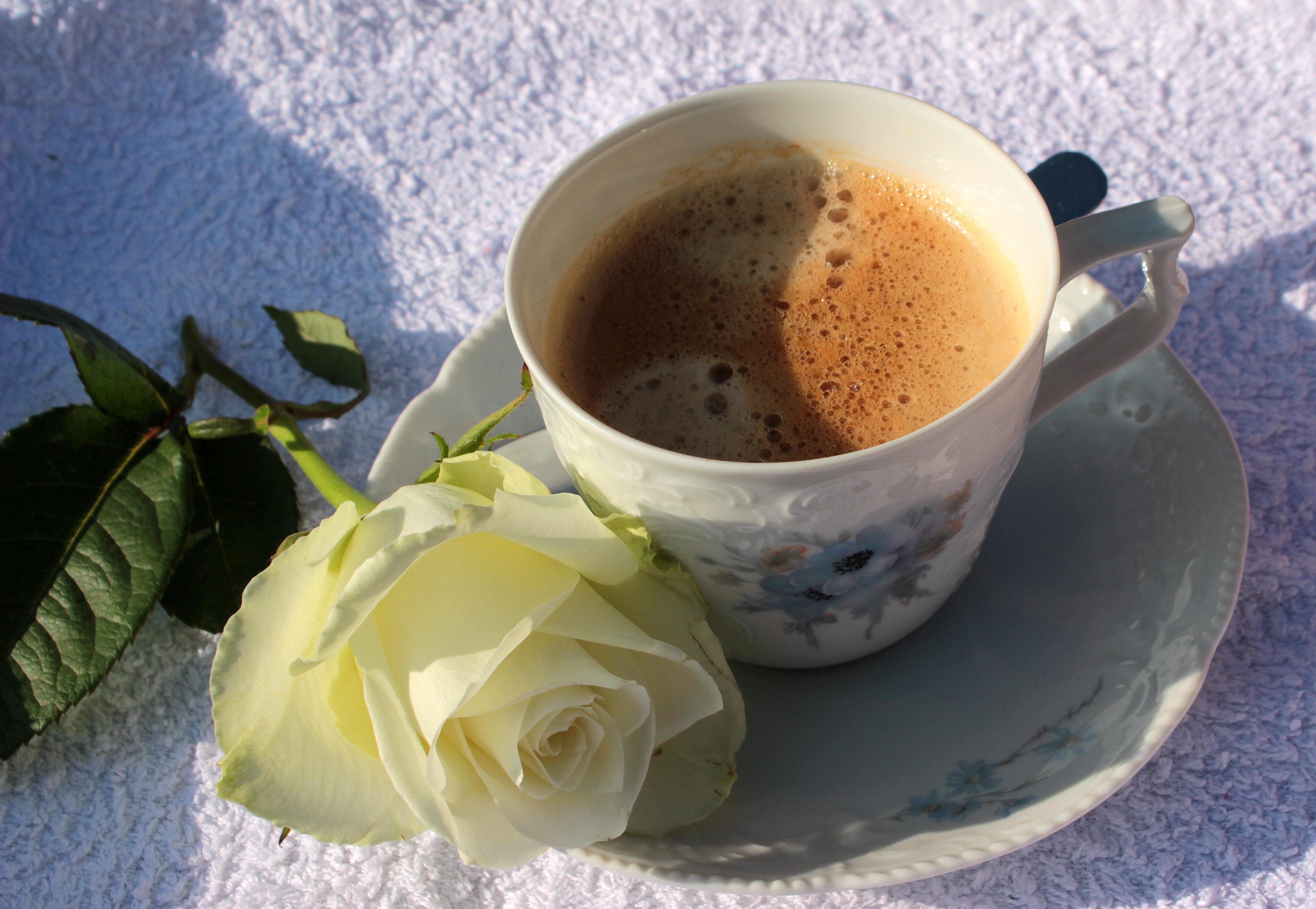 Free Images Outdoor Sunshine Tea Flower Food Saucer Drink