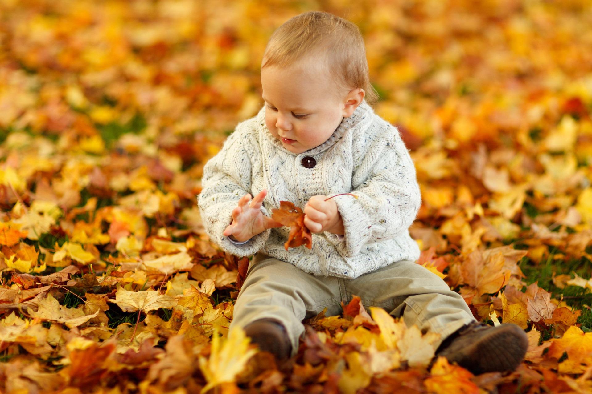 Написать, картинки осень дети листья