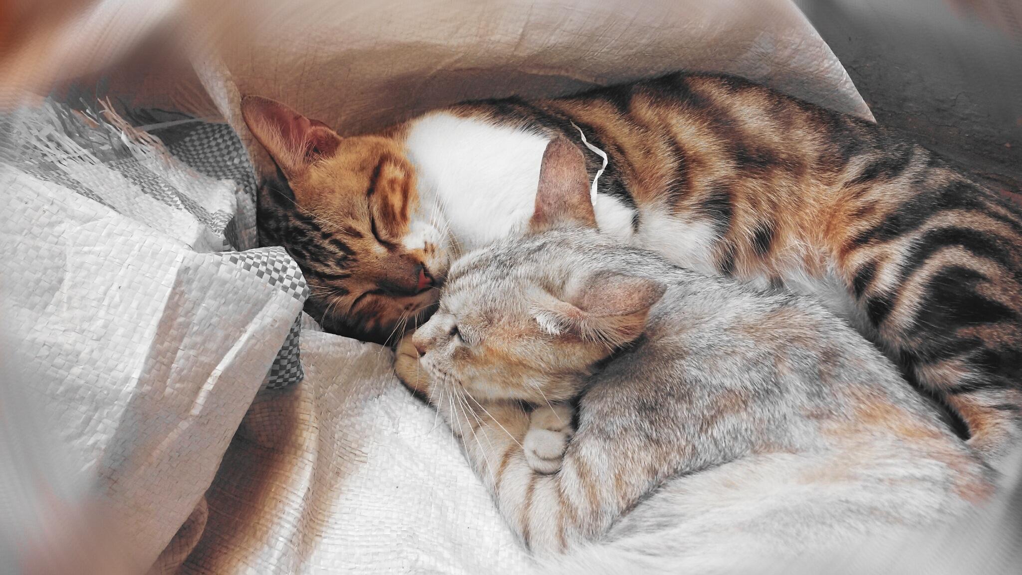 Download 89+  Gambar Kucing Lucu Berpelukan Terbaru HD