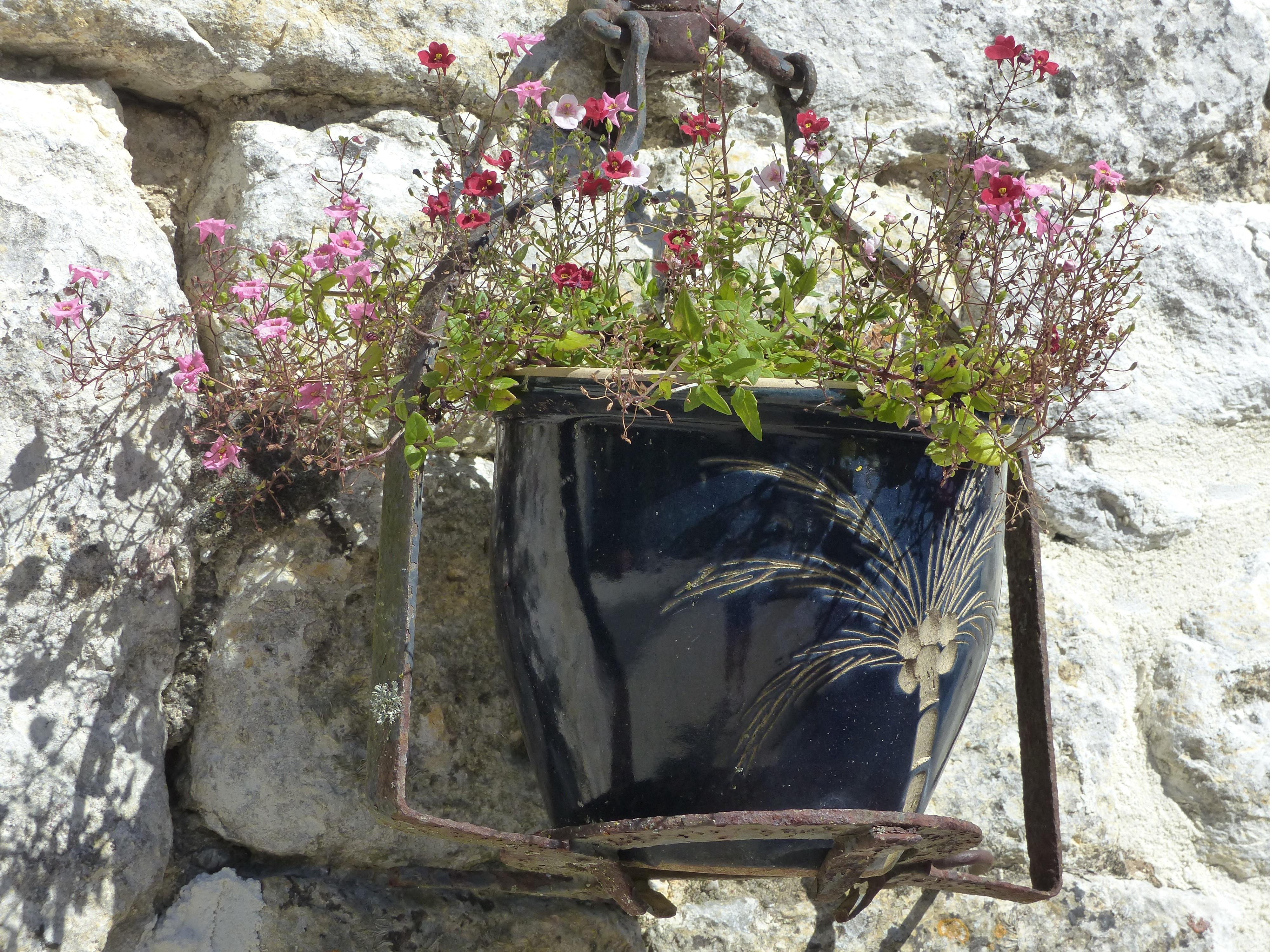 Gratis billeder : udendørs, plante, blomst, væg, gryde, Dam, have ...