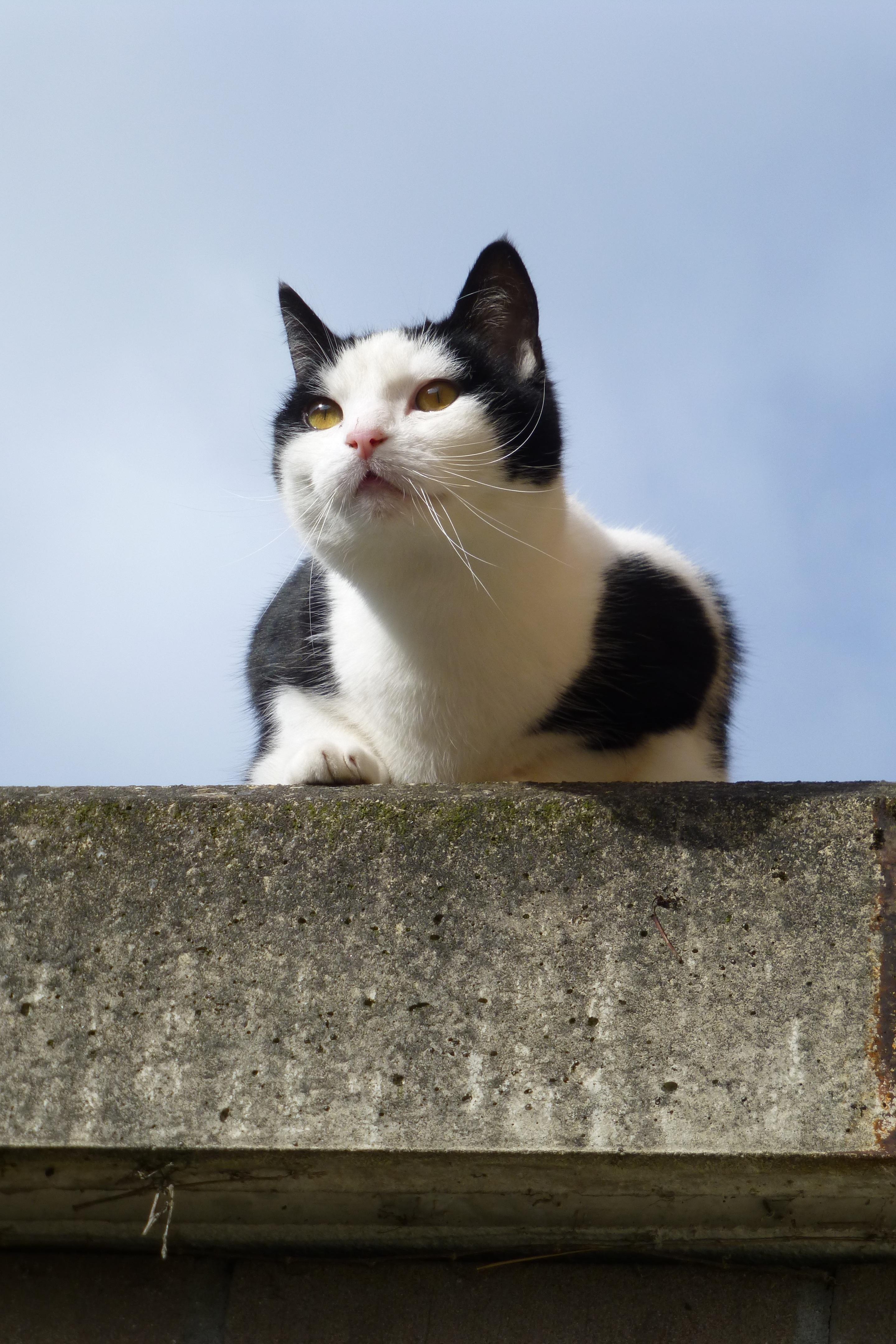 zadarmo pekná mačička pics