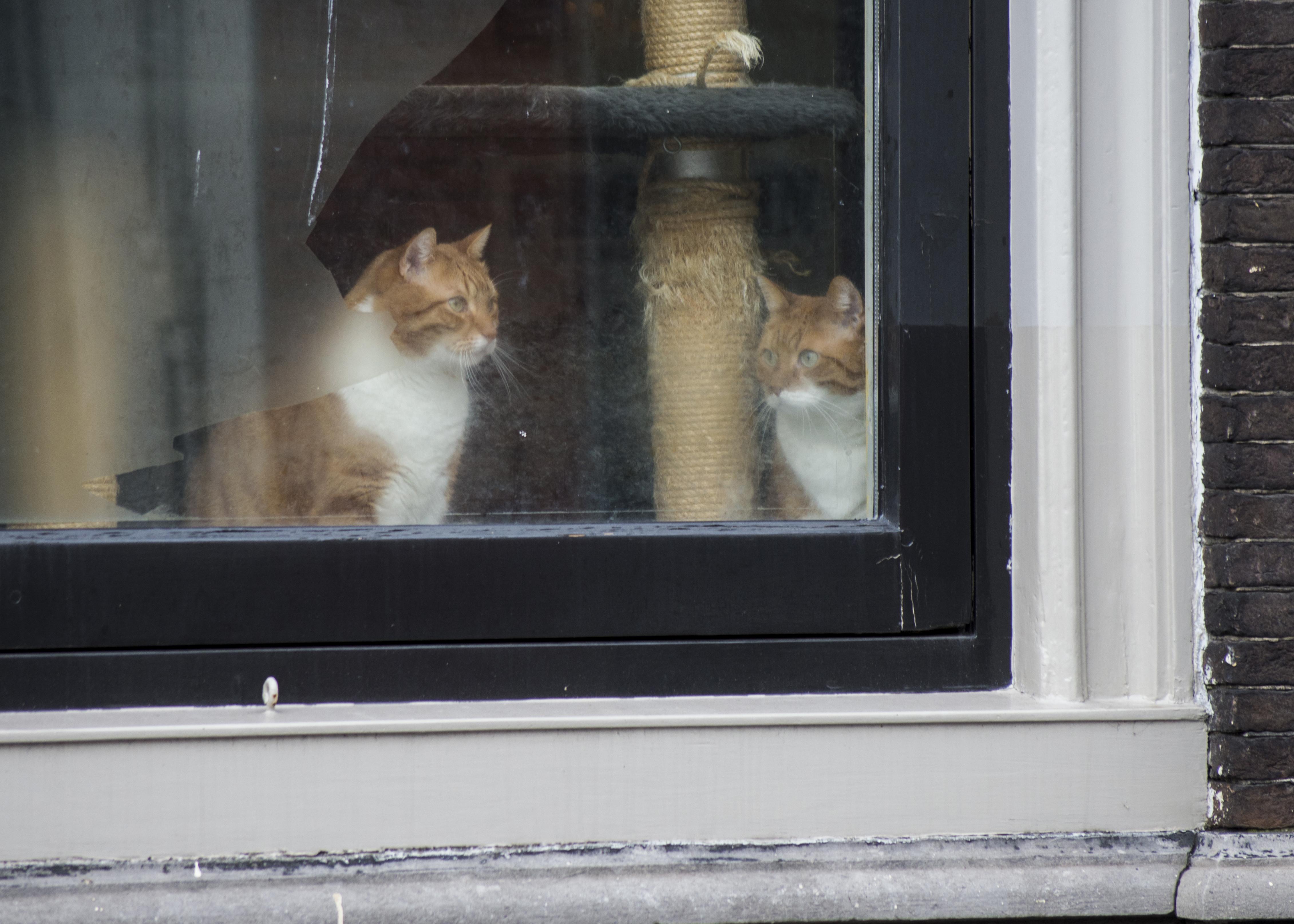 Kostenlose foto : draussen, Fenster, Tier, städtisch, Katze, Nikon ...