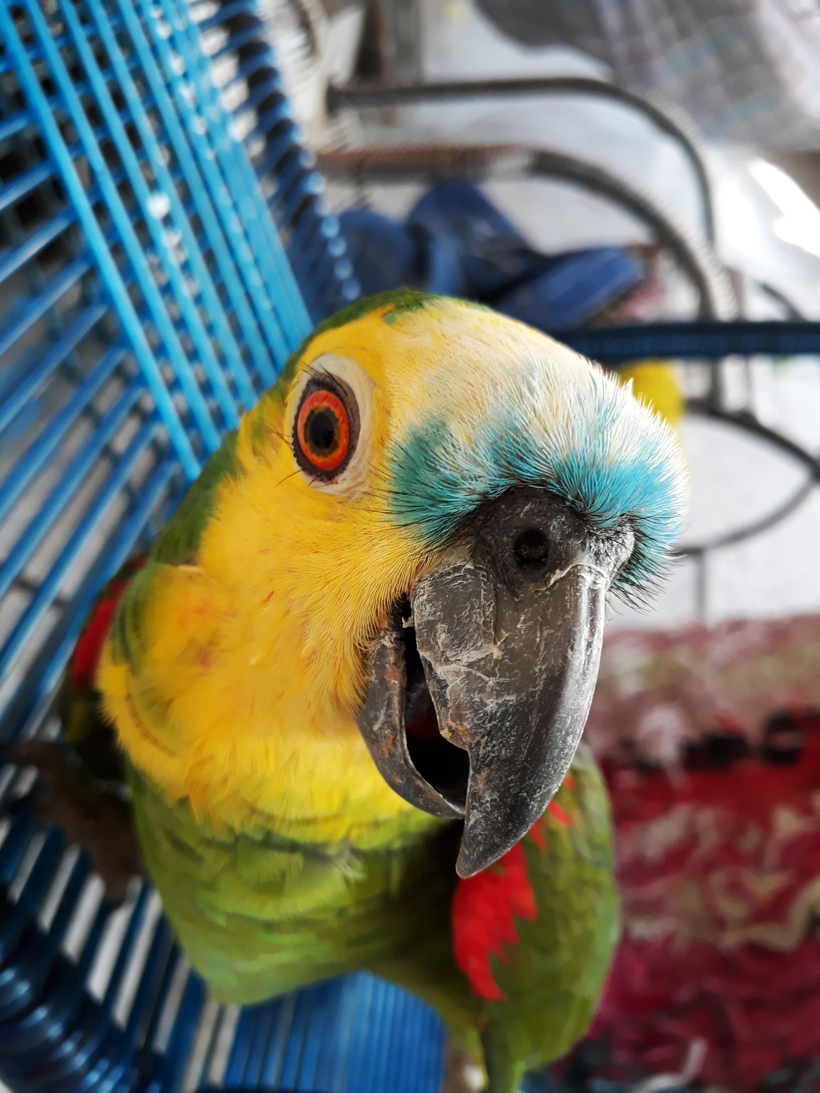 некоторые прикольные попугаи фото новых