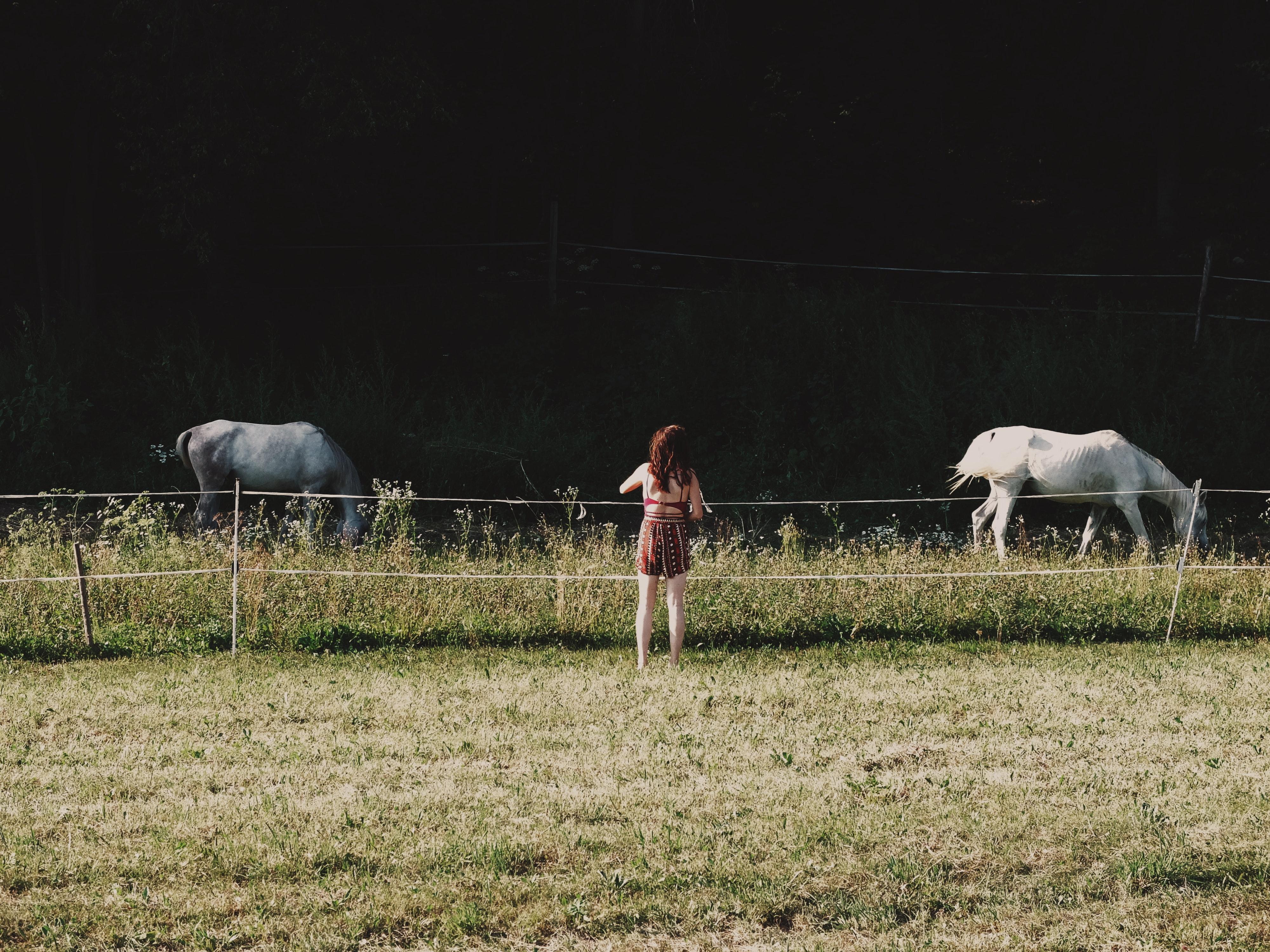 поле для выпаса скота