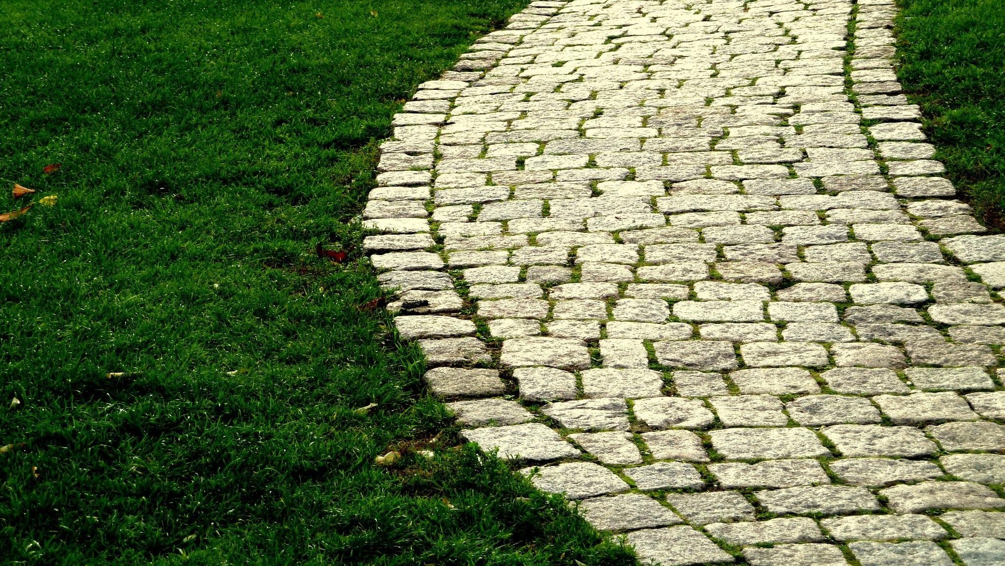 free images path plant field ground lawn sidewalk