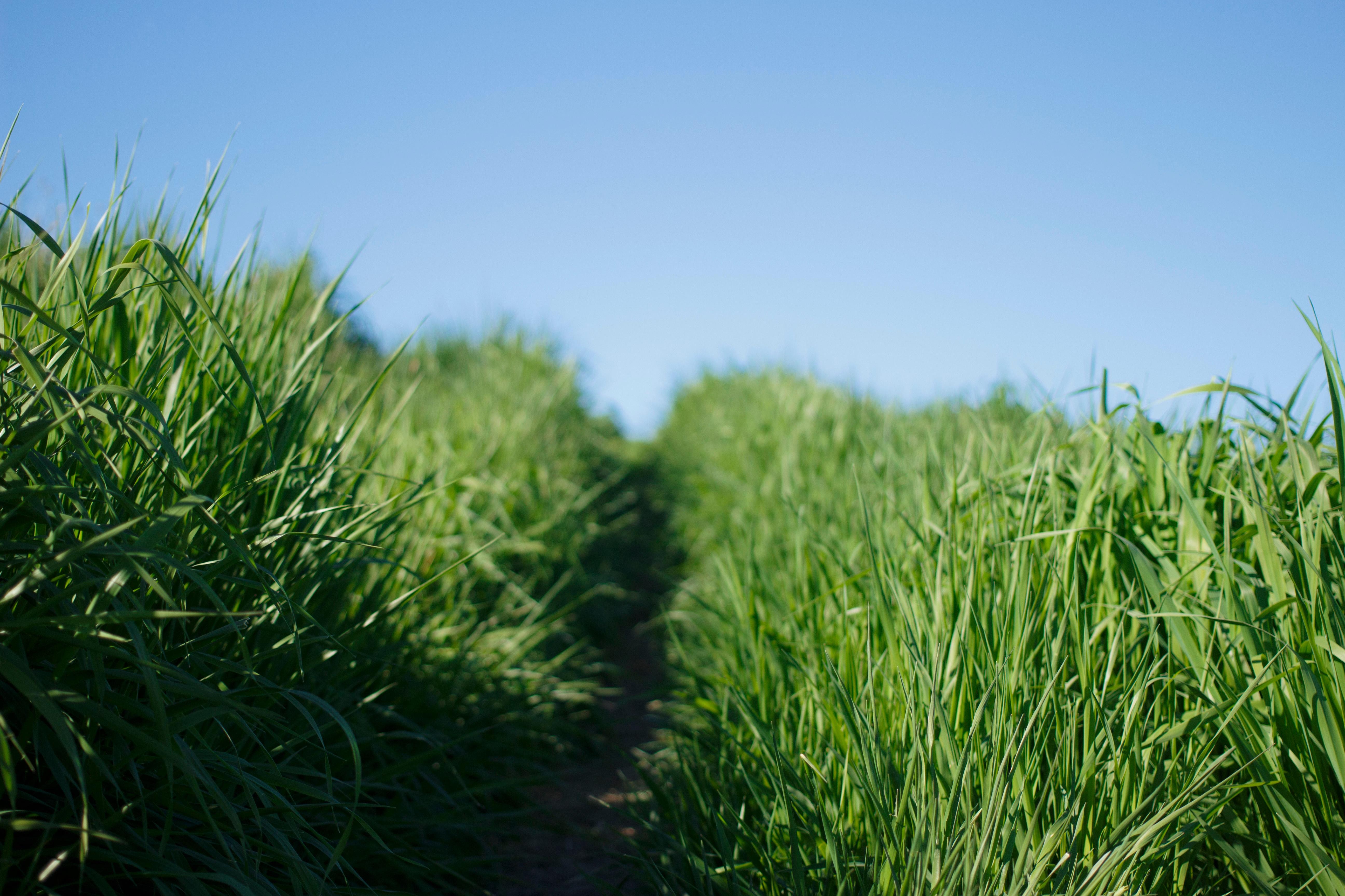 Kostenlose Foto Pfad Himmel Feld Rasen Wiese Prärie Blume