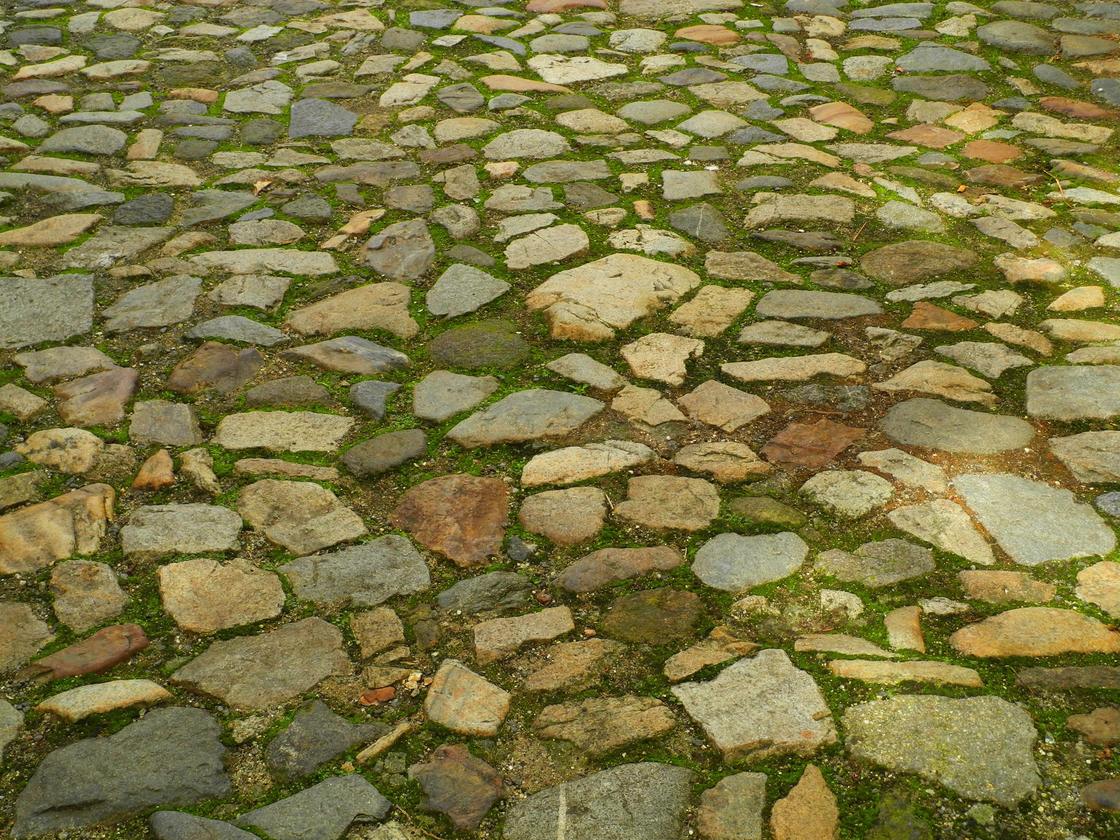fotos gratis camino csped rock sendero piso guijarro asfalto pavimento pasarela musgo verde suelo pared de piedra piedras