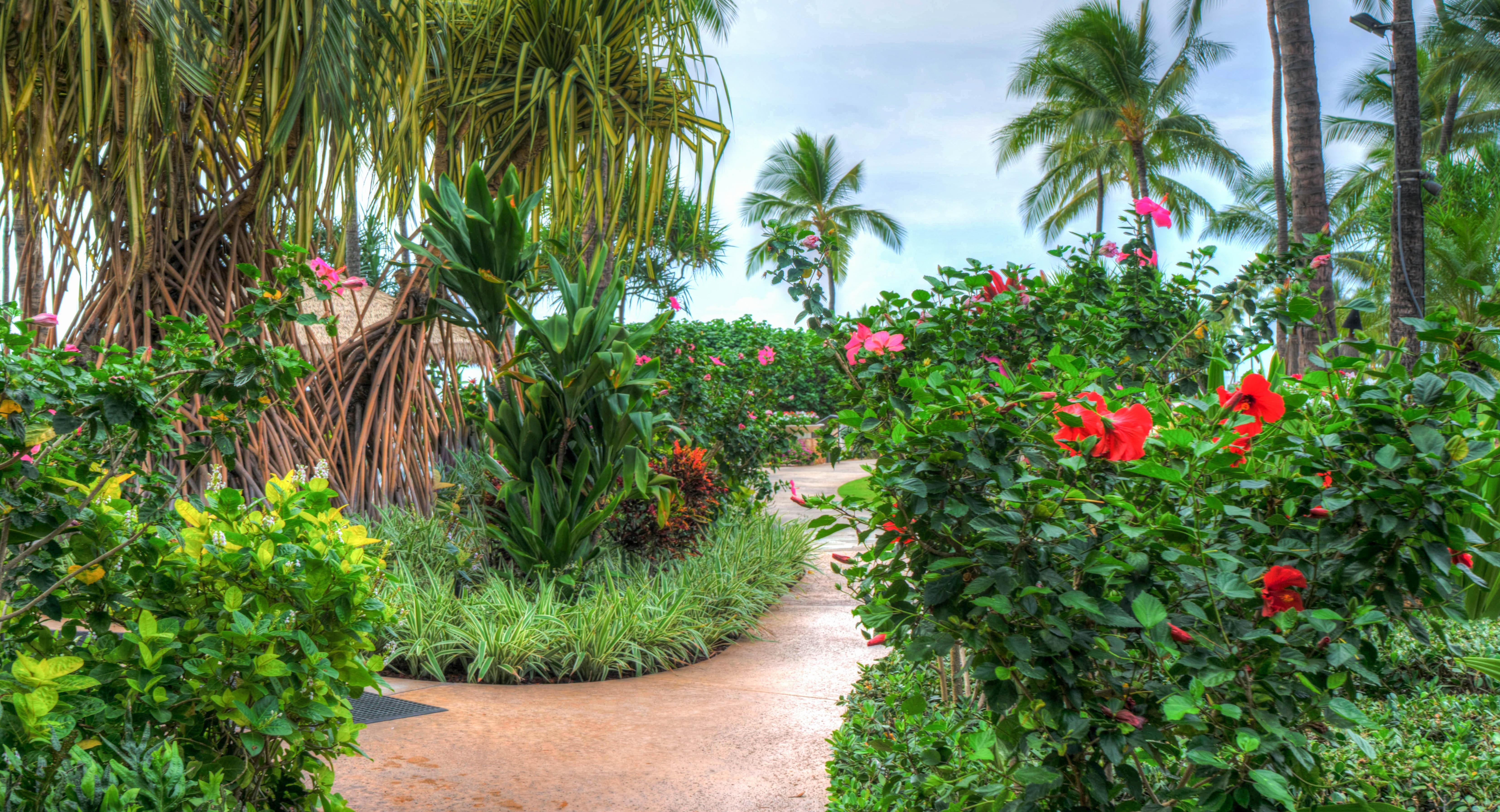 румянец, тропический сад гавайи фото минувшие