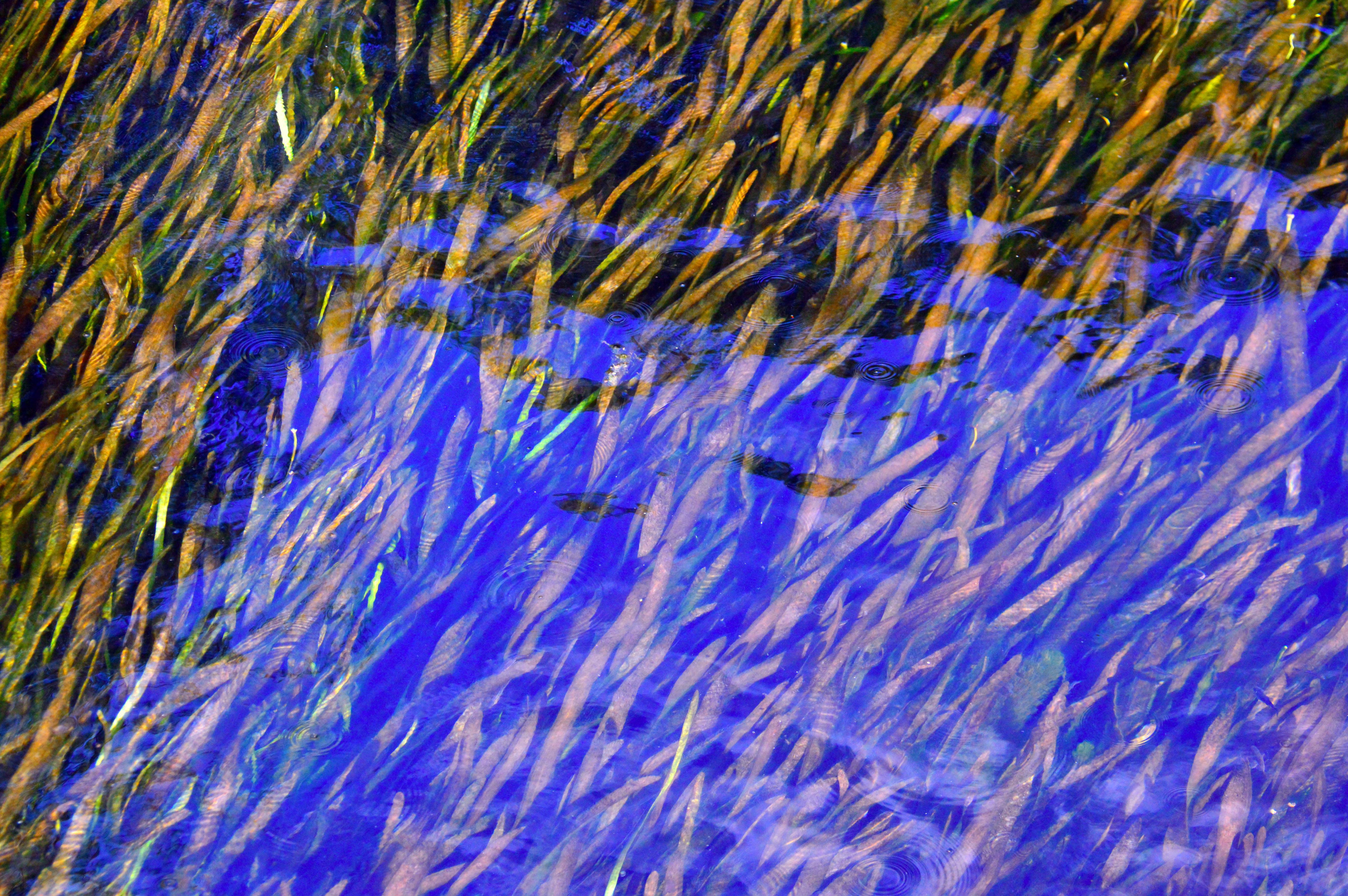 Kostenlose Foto : Muster, Abstrakt, Textur, Tapete, Farbe, Kunst, Entwurf,  Illustration, Bunt, Hintergrund, Hell, Blau, Grafik, Licht, Platz, Modern,  ...