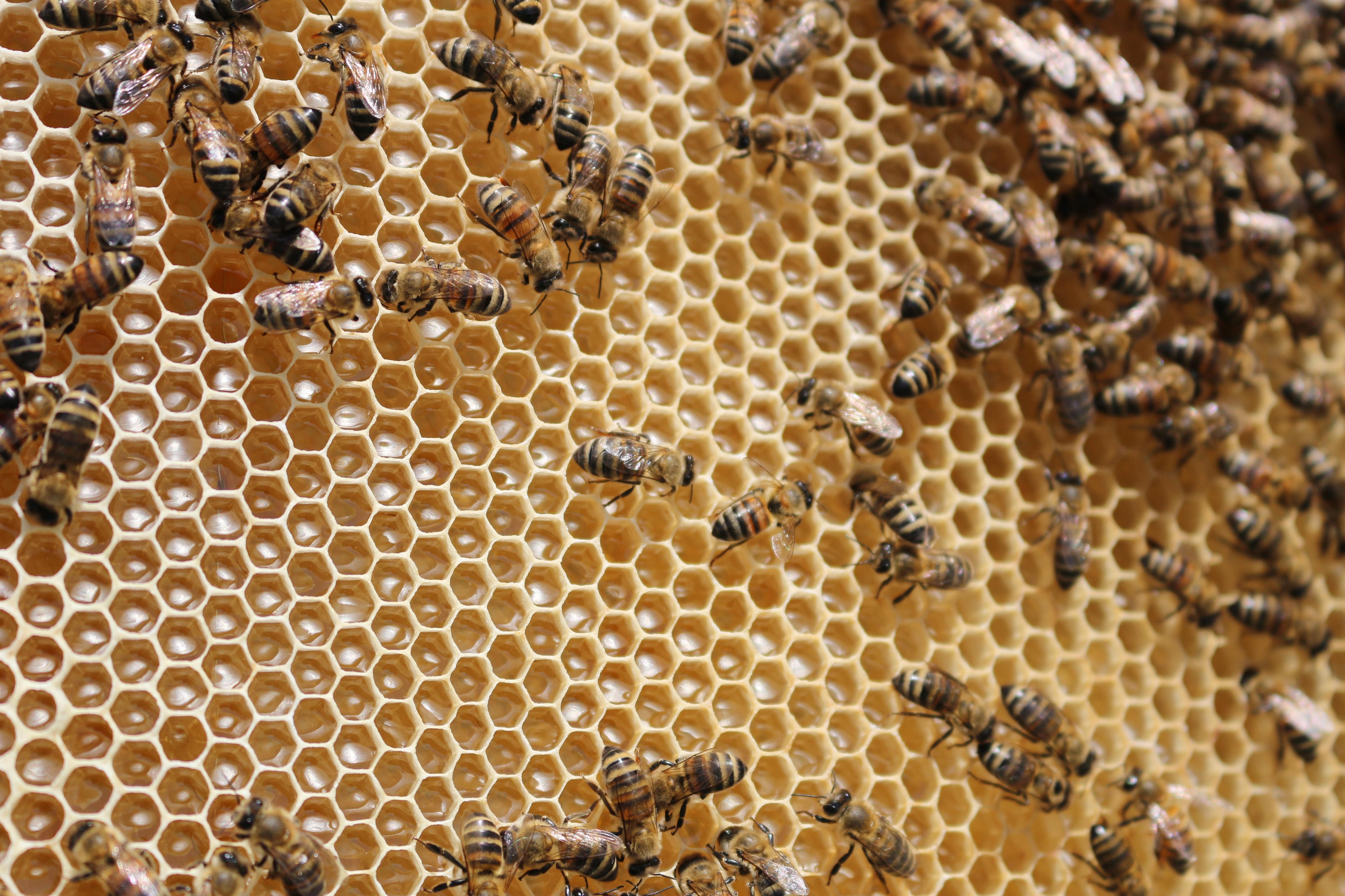 идеальны картинка соты с пчелами для бритья, хотите