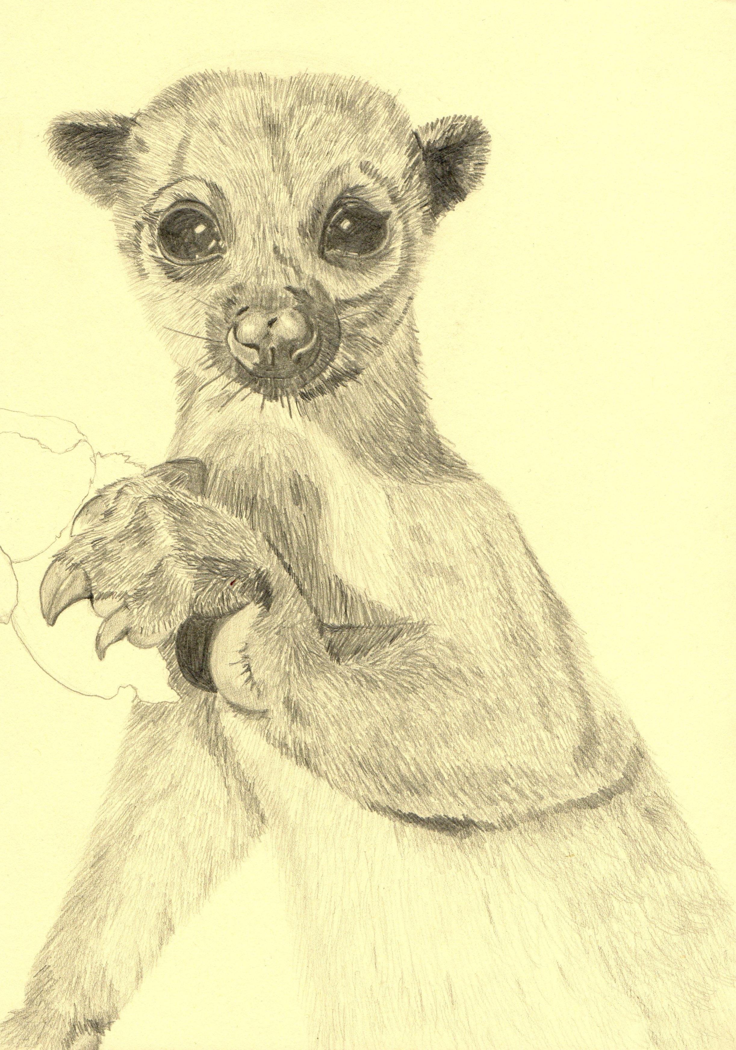 8200 Gambar Sketsa Hewan-hewan Terbaru