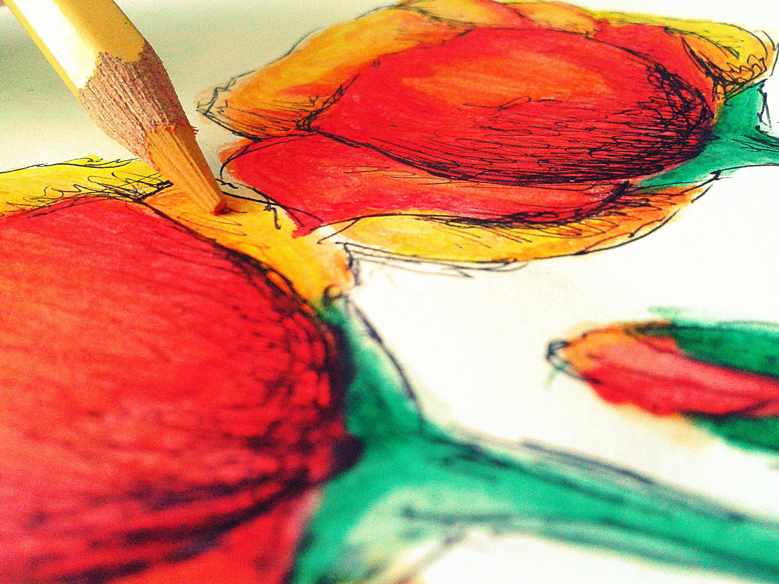Free Images : pencil, leaf, flower, petal, red, color, still life ...