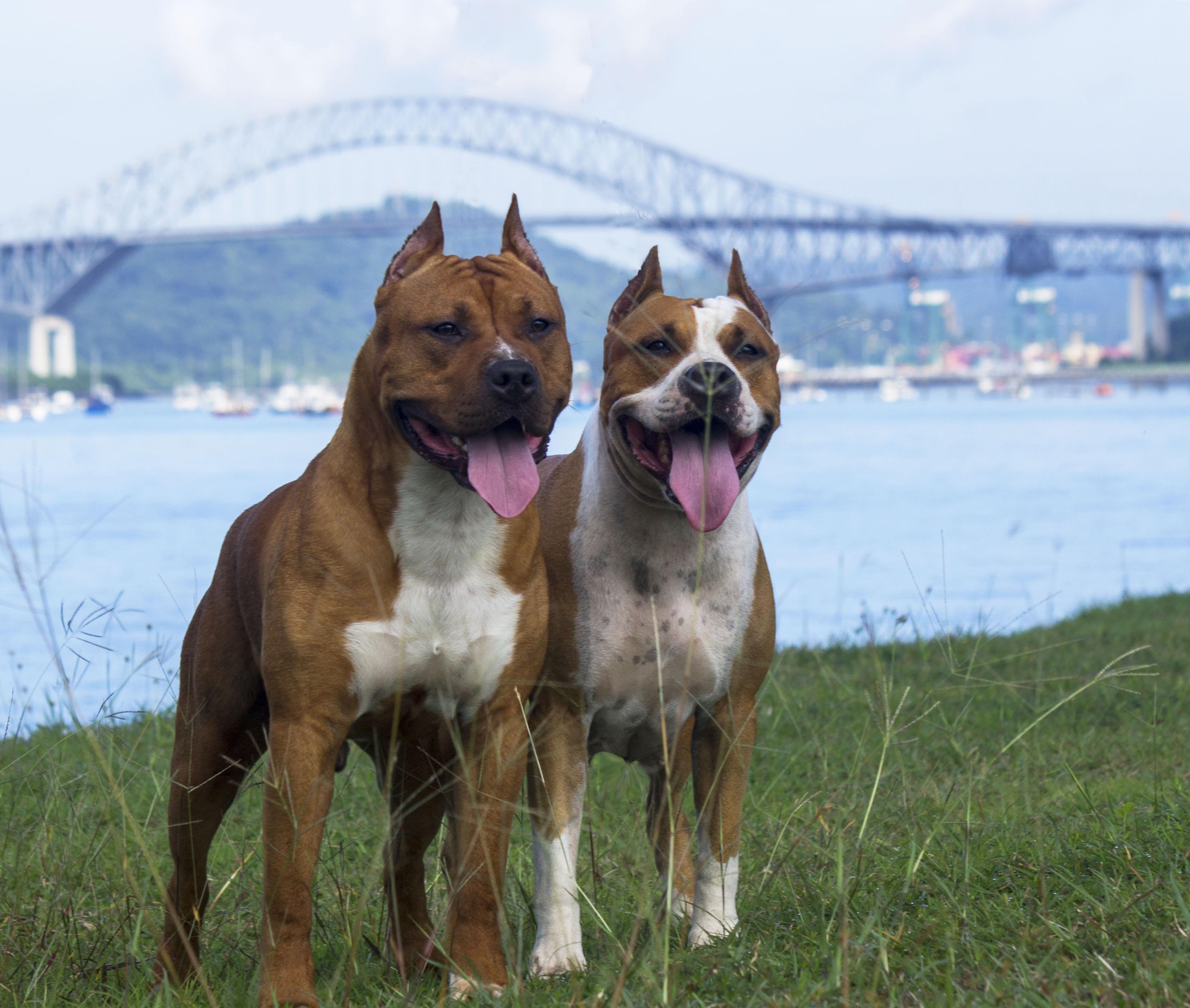 Free Images People Bridge Pets Dogs Happy Animals Vertebrate