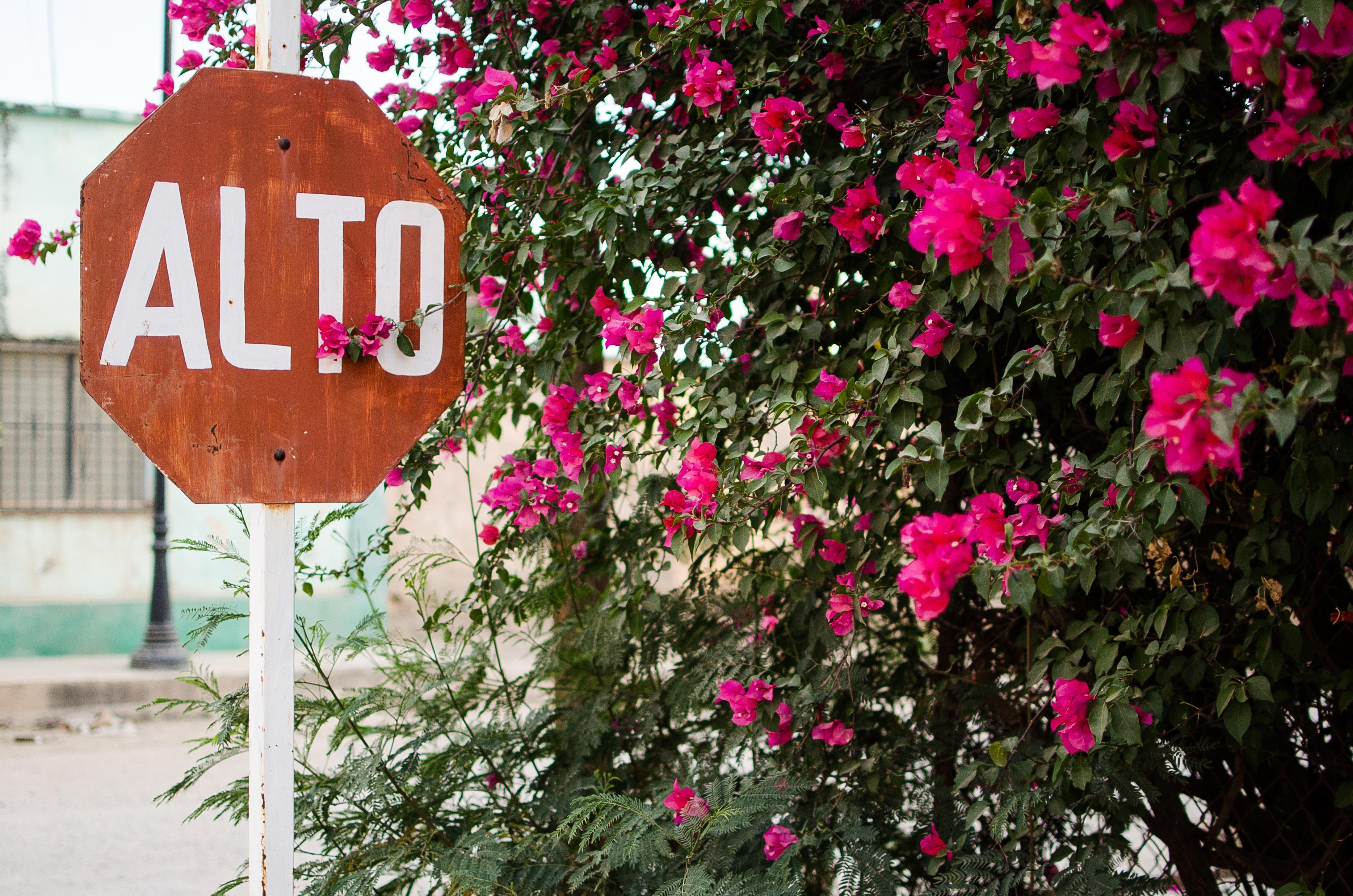 Images Gratuites Gens Fleur Haute Rose Flore Des Endroits