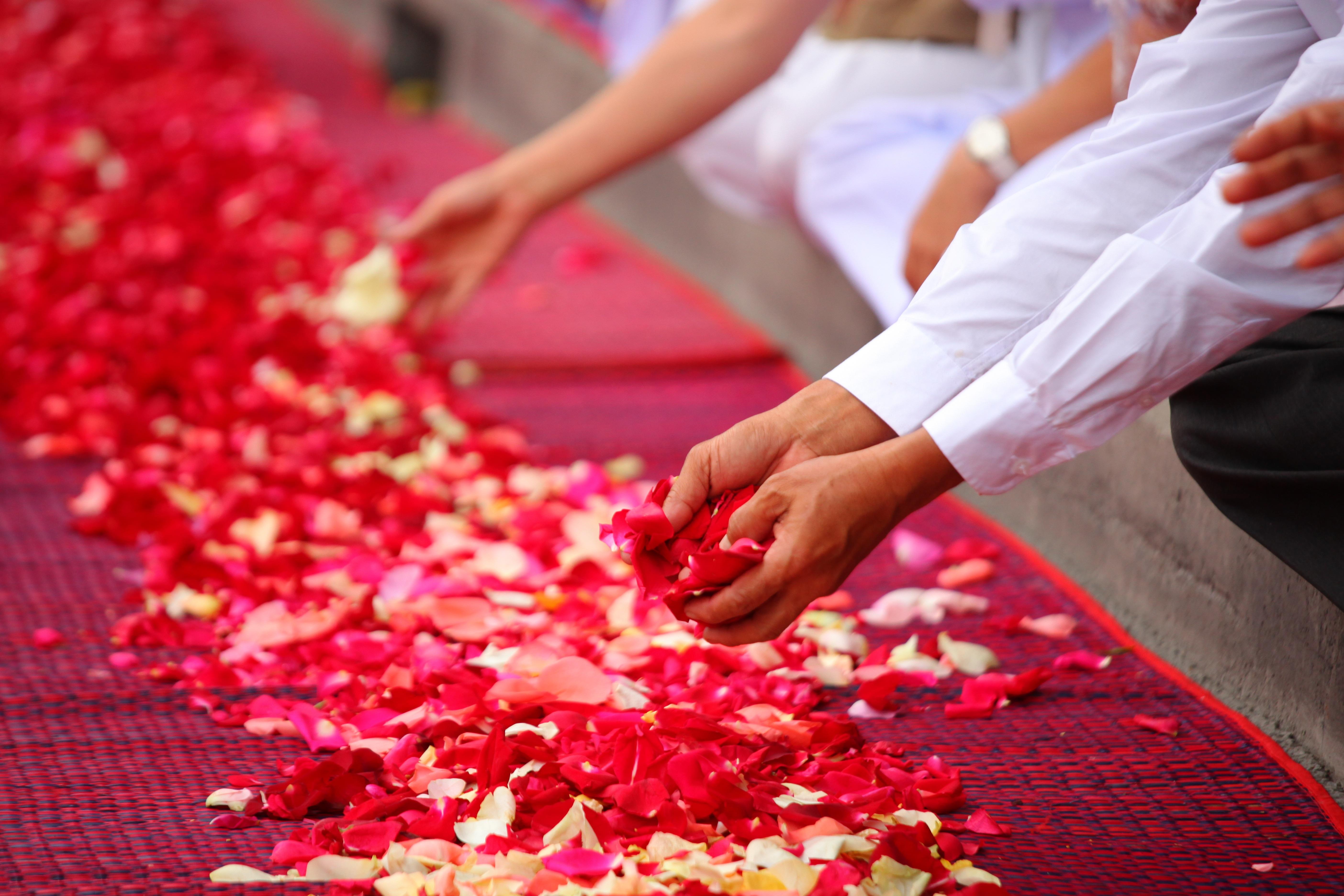 Images Gratuites Gens Plante Fleur Petale Sol Decoration