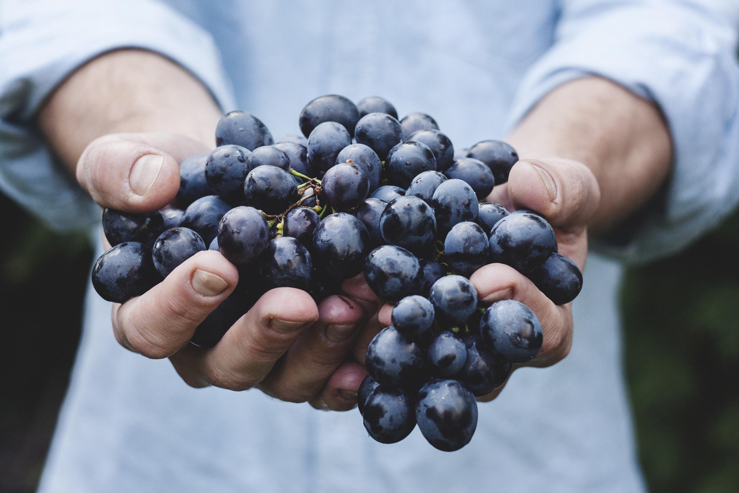 blauwe druiven gezond