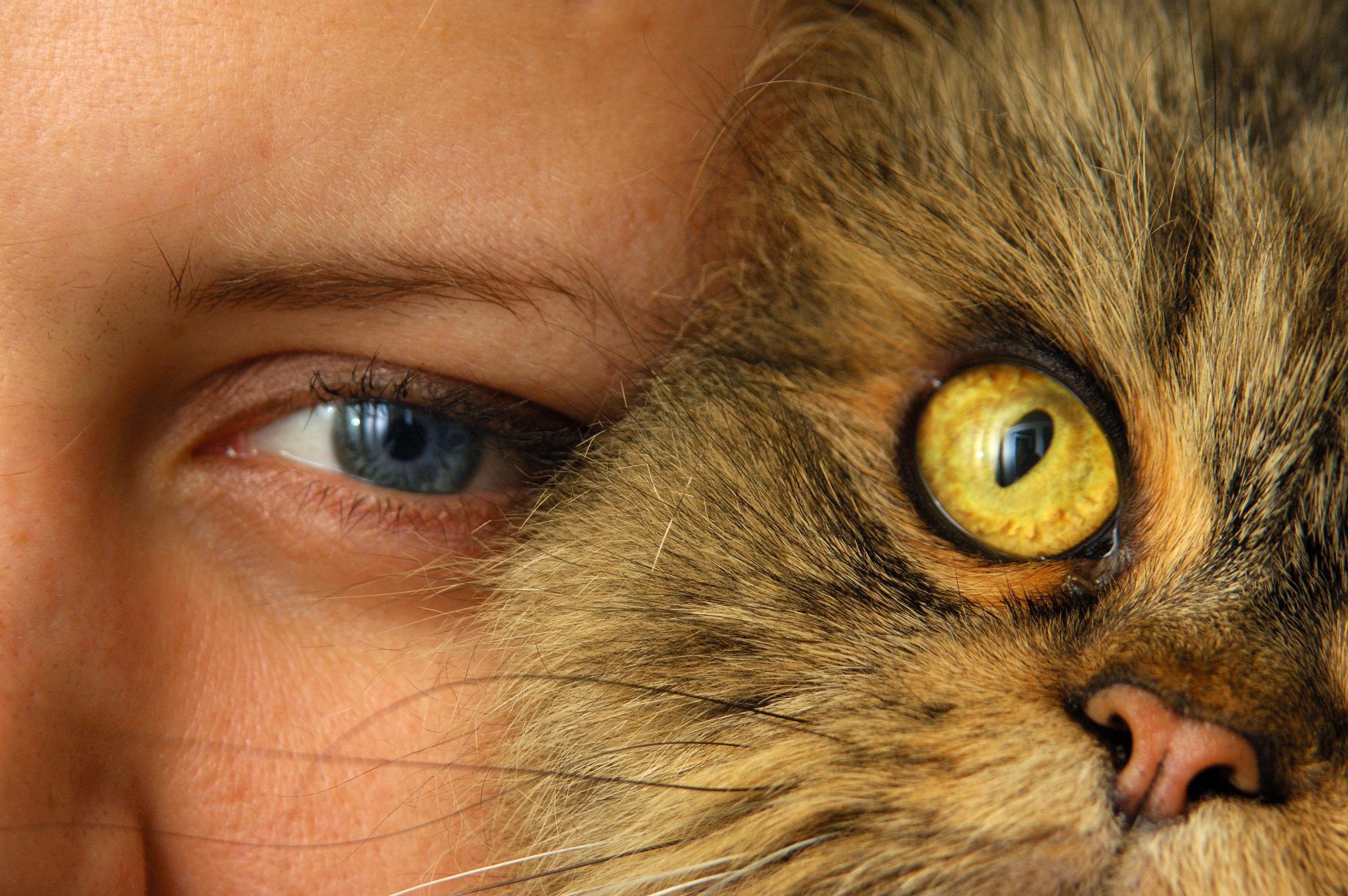 картинка глаз человека и кота степного волка значительно