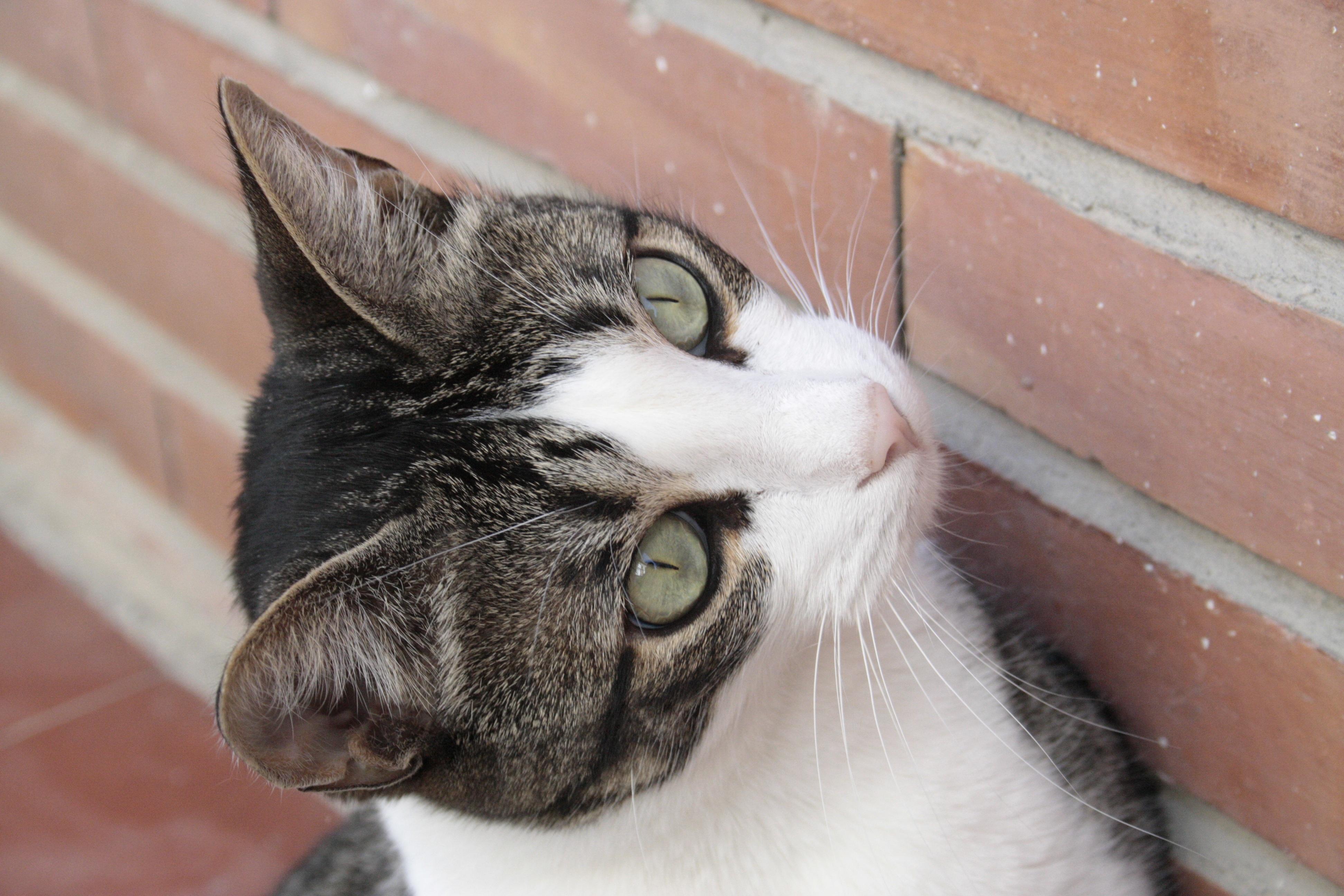 Www zblízka mačička pics com