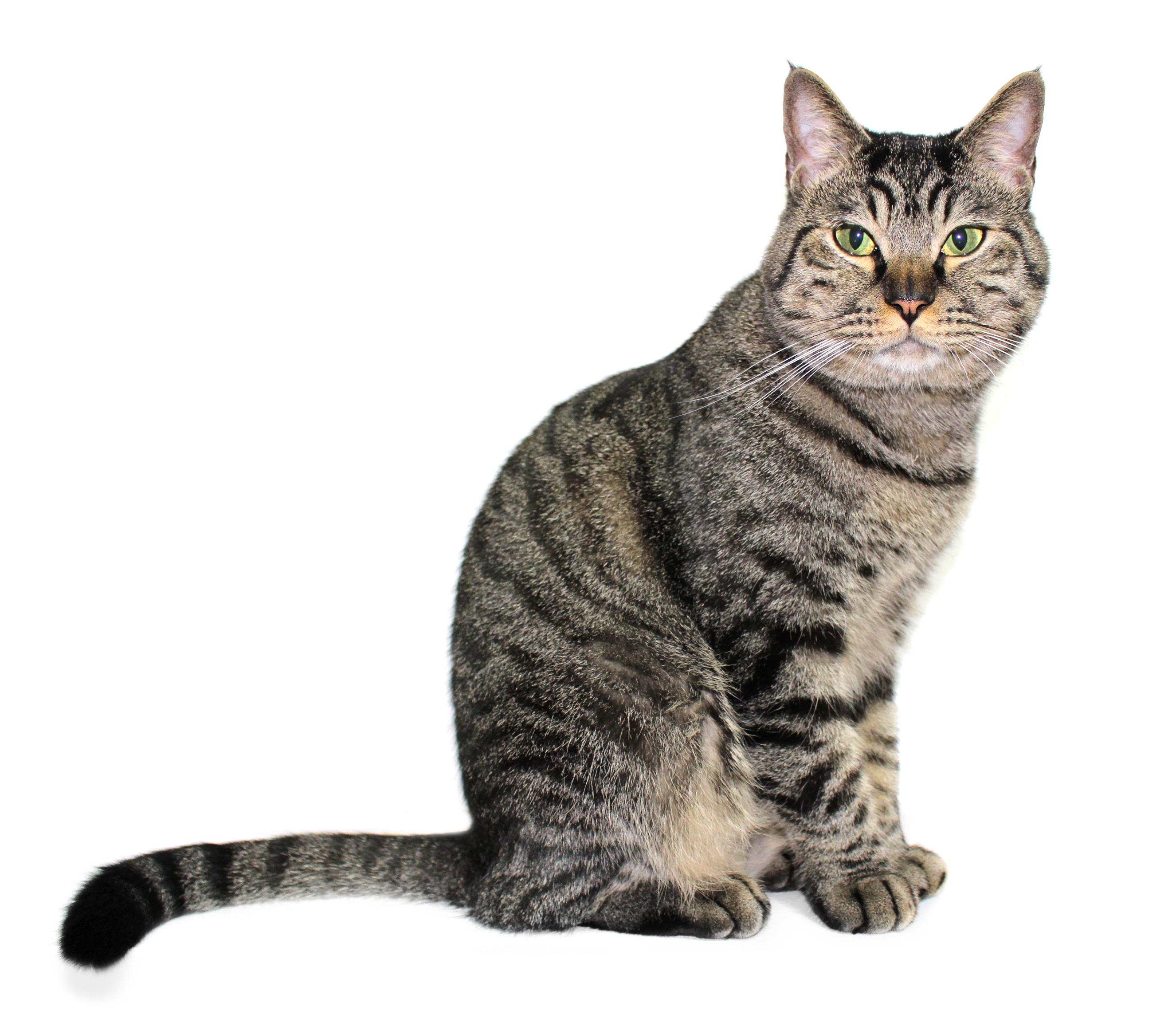 картинка домашнего животного кошка весна живет твоей