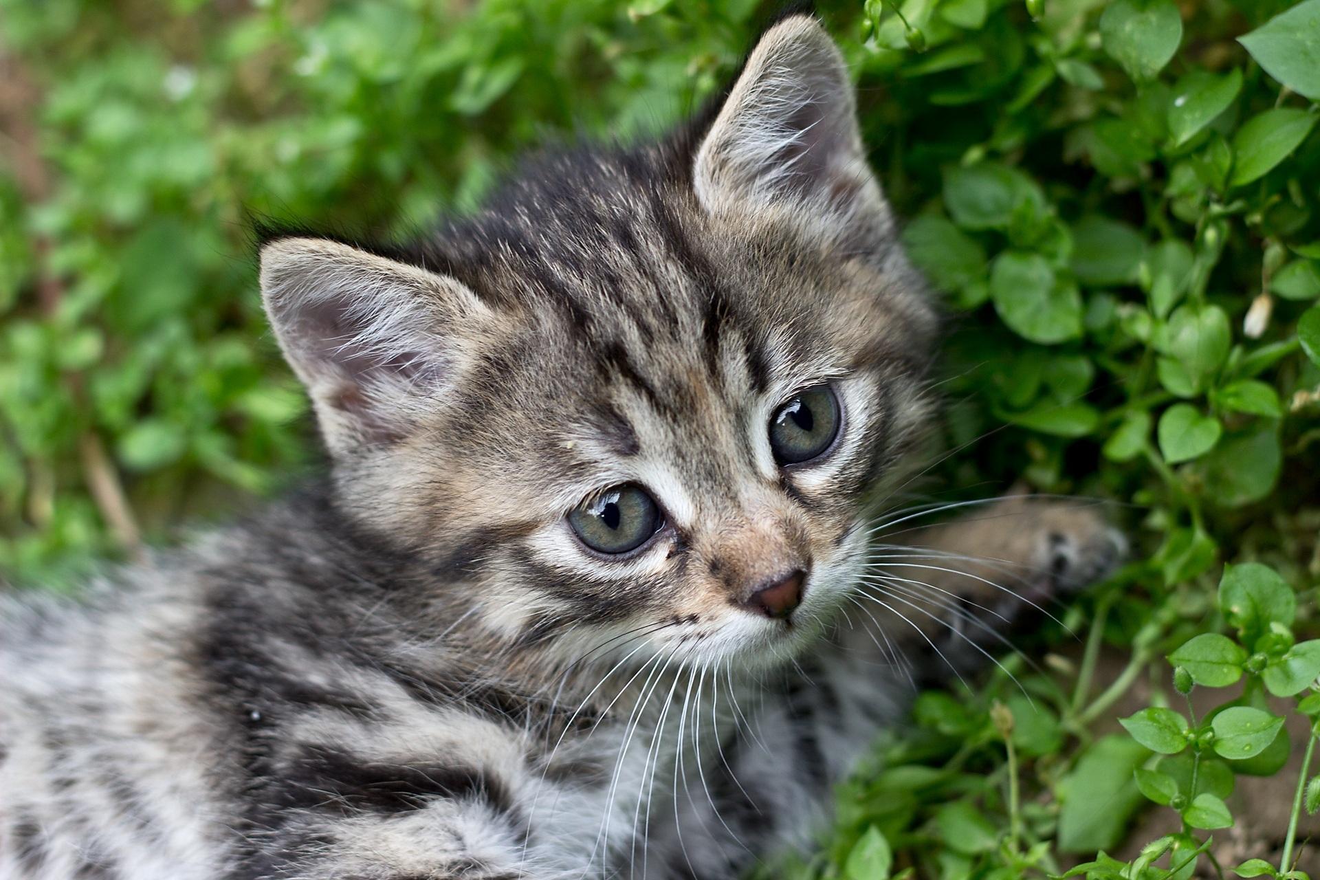 фотографии котят серых первый