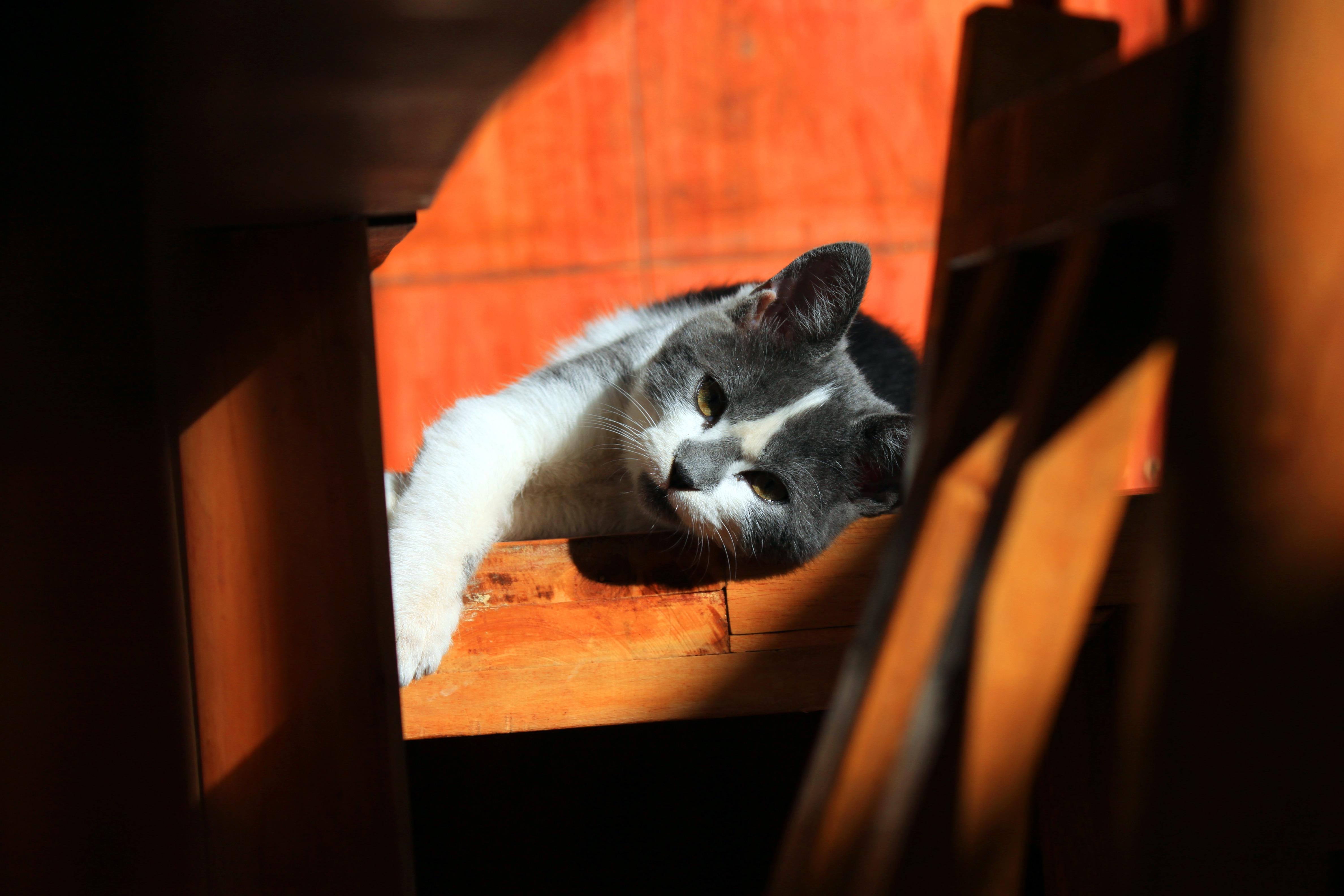Fotos gratis : mascota, gatito, gato, color, oscuridad, descanso ...