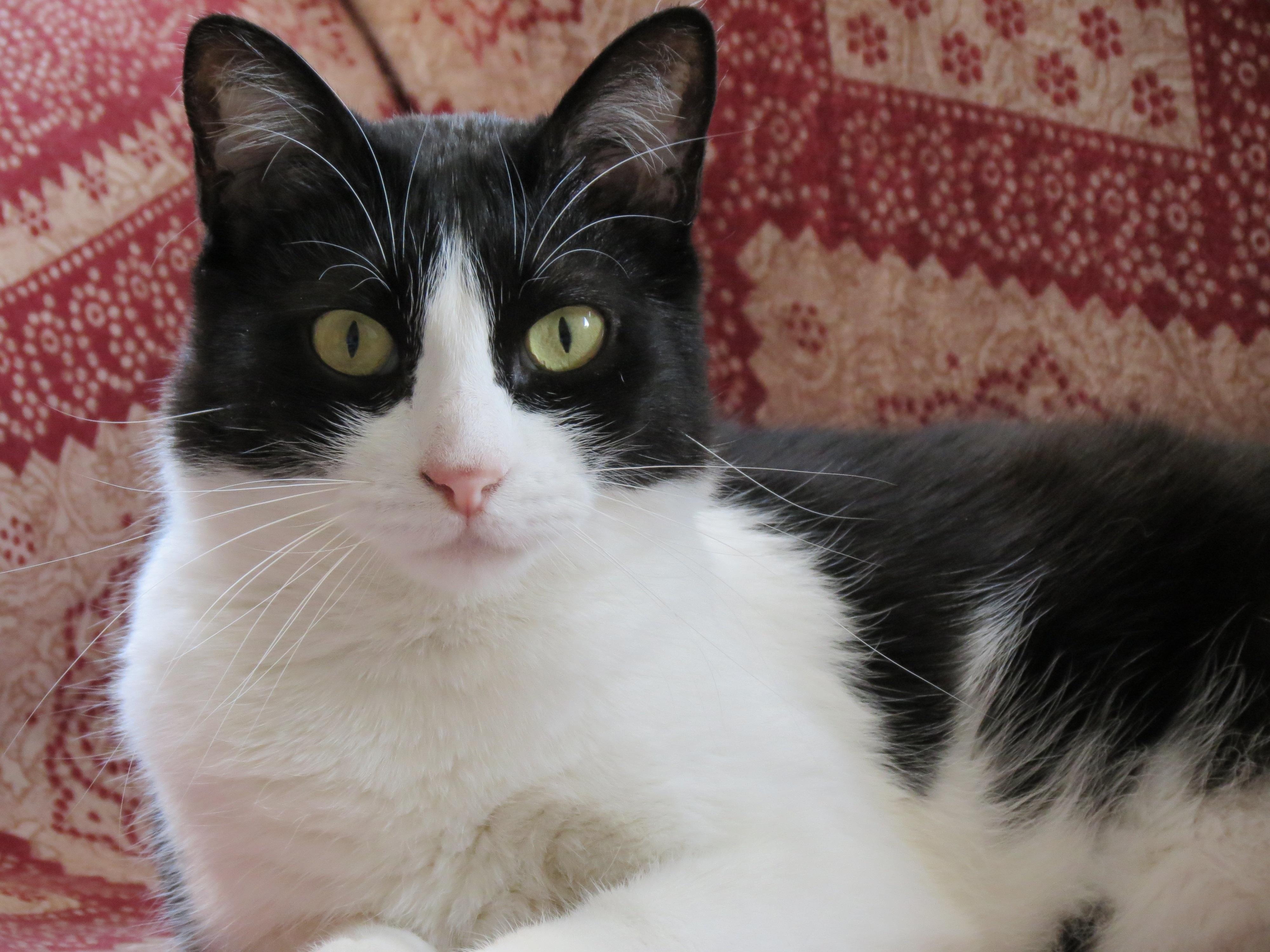 Frases Com Animais De Estimação Para Facebook: Banco De Imagens : Animal, Gatinho, Gato, Felino, Animais