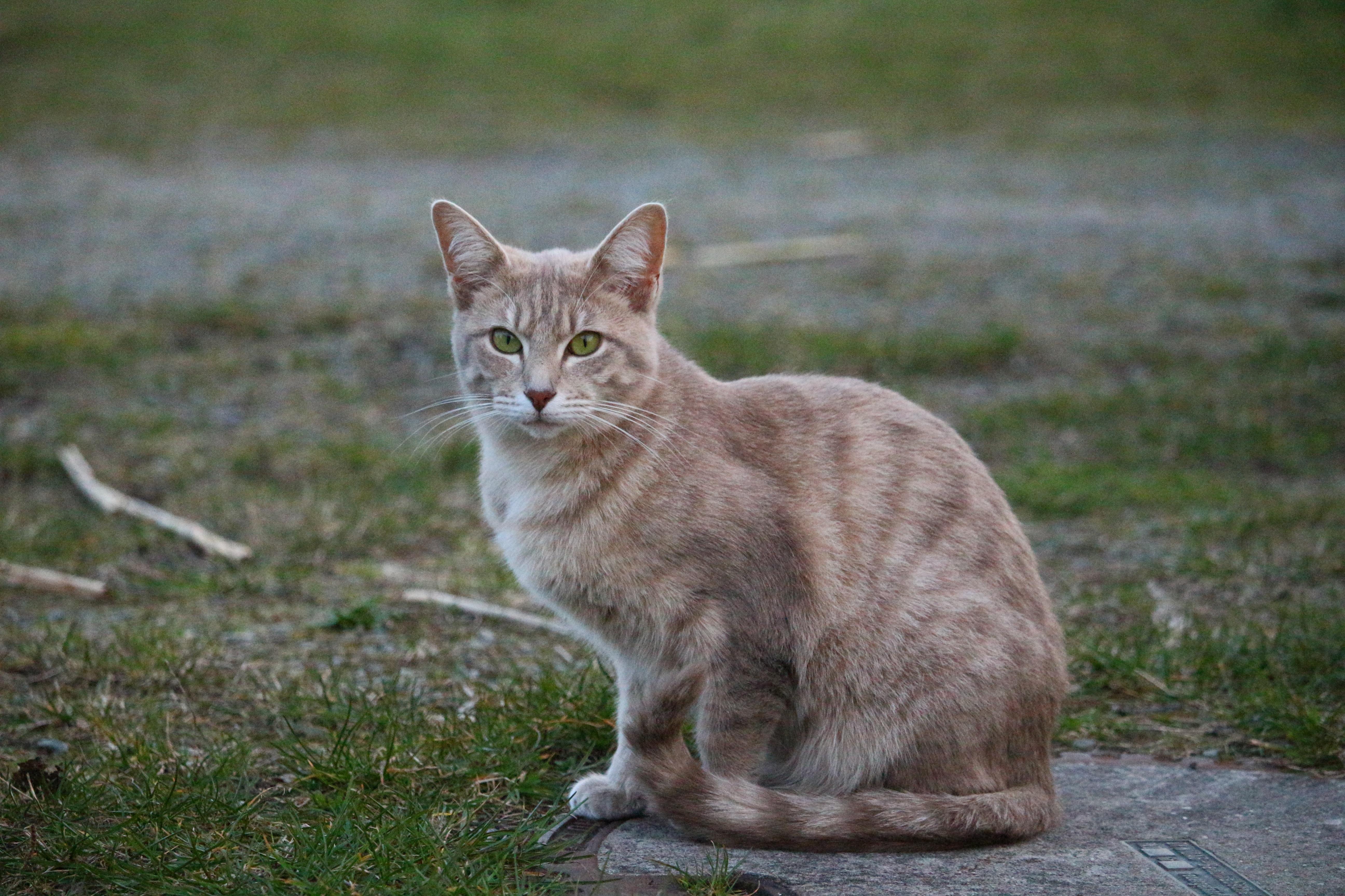 Free pet kitten fauna whiskers vertebrate mieze