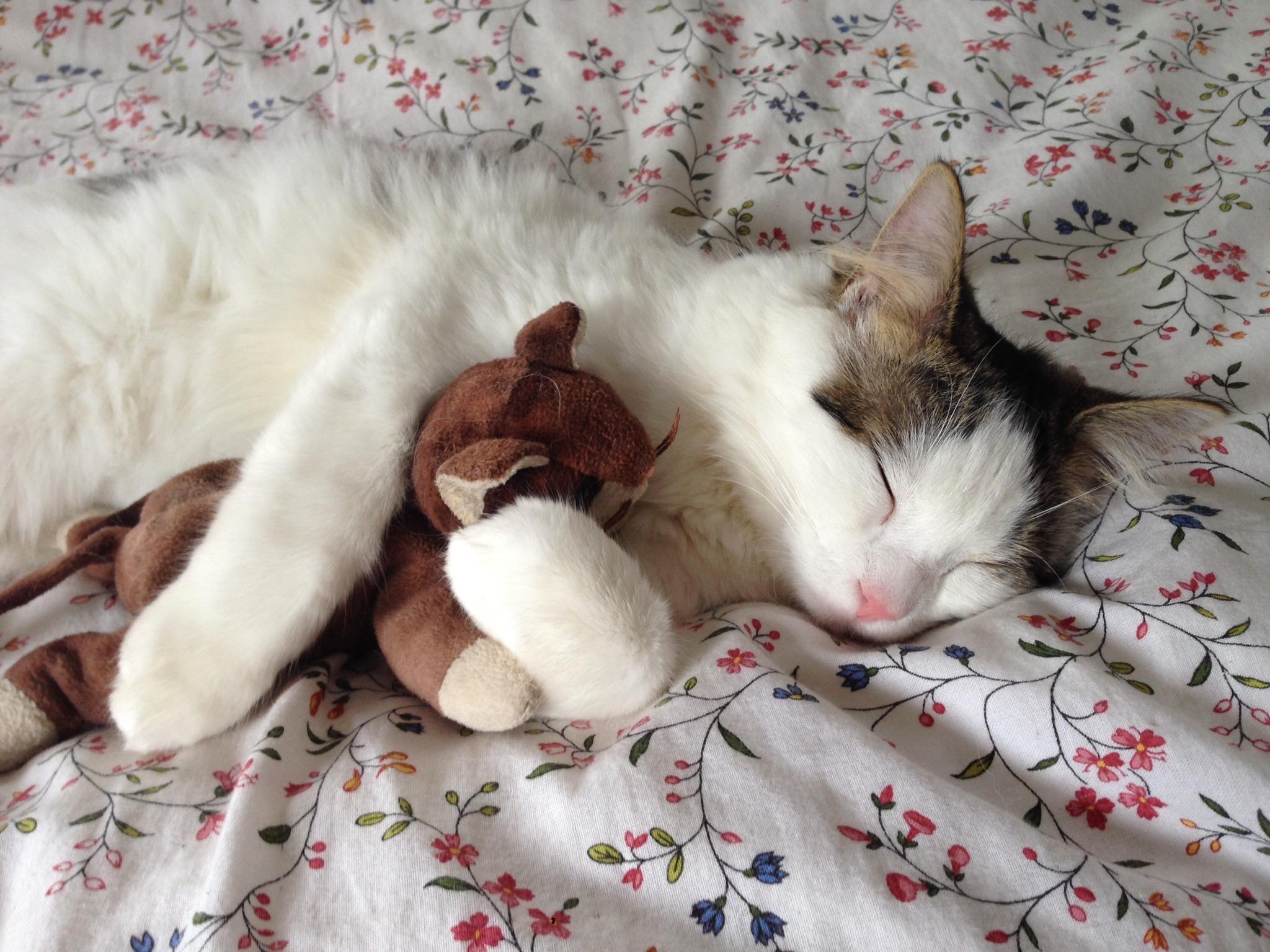 images gratuites animal de compagnie se d tendre chaton chat en train de dormir treinte. Black Bedroom Furniture Sets. Home Design Ideas