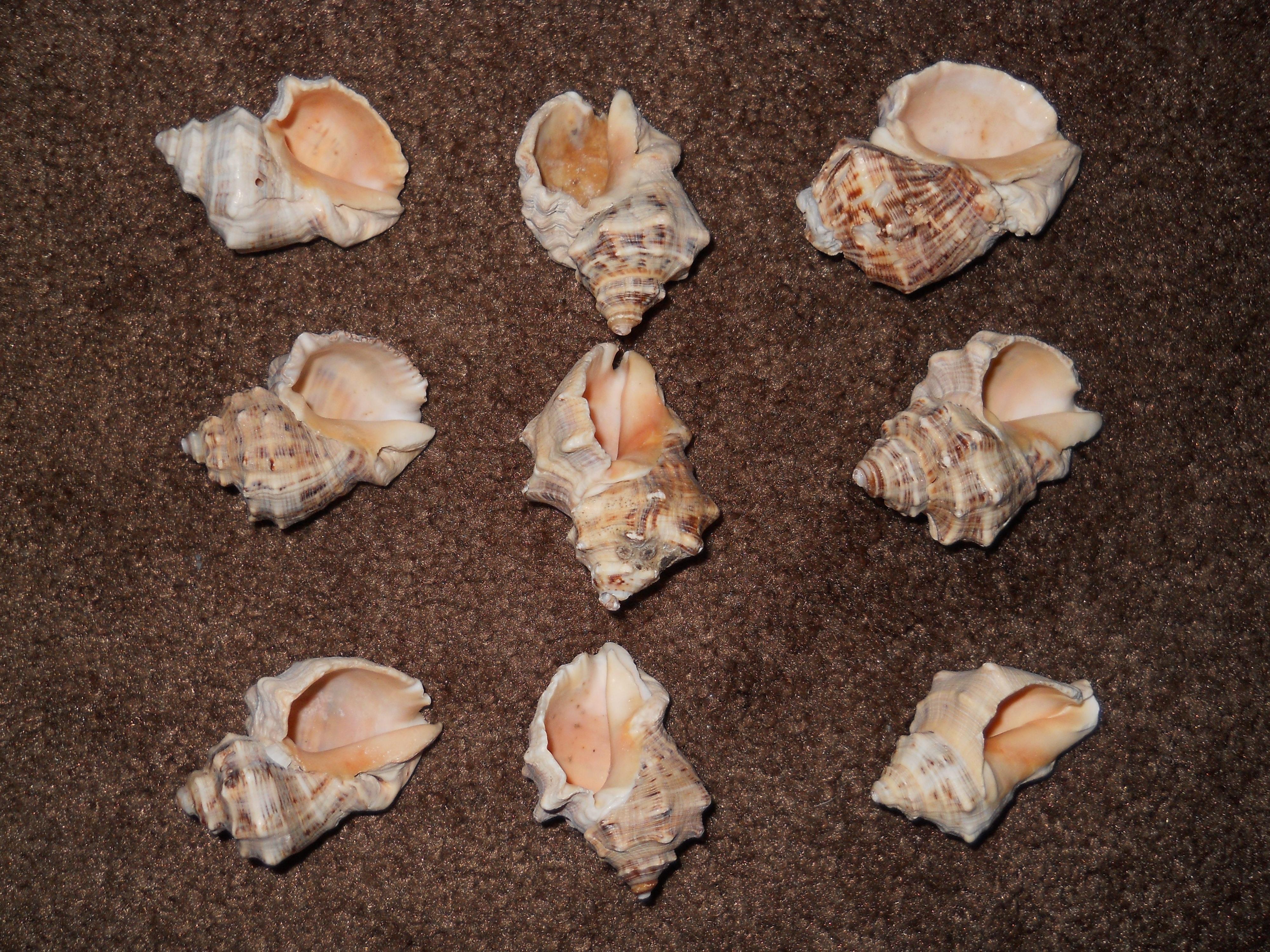 Gambar Daun Bunga Makanan Bahan Invertebrata Kerang Laut