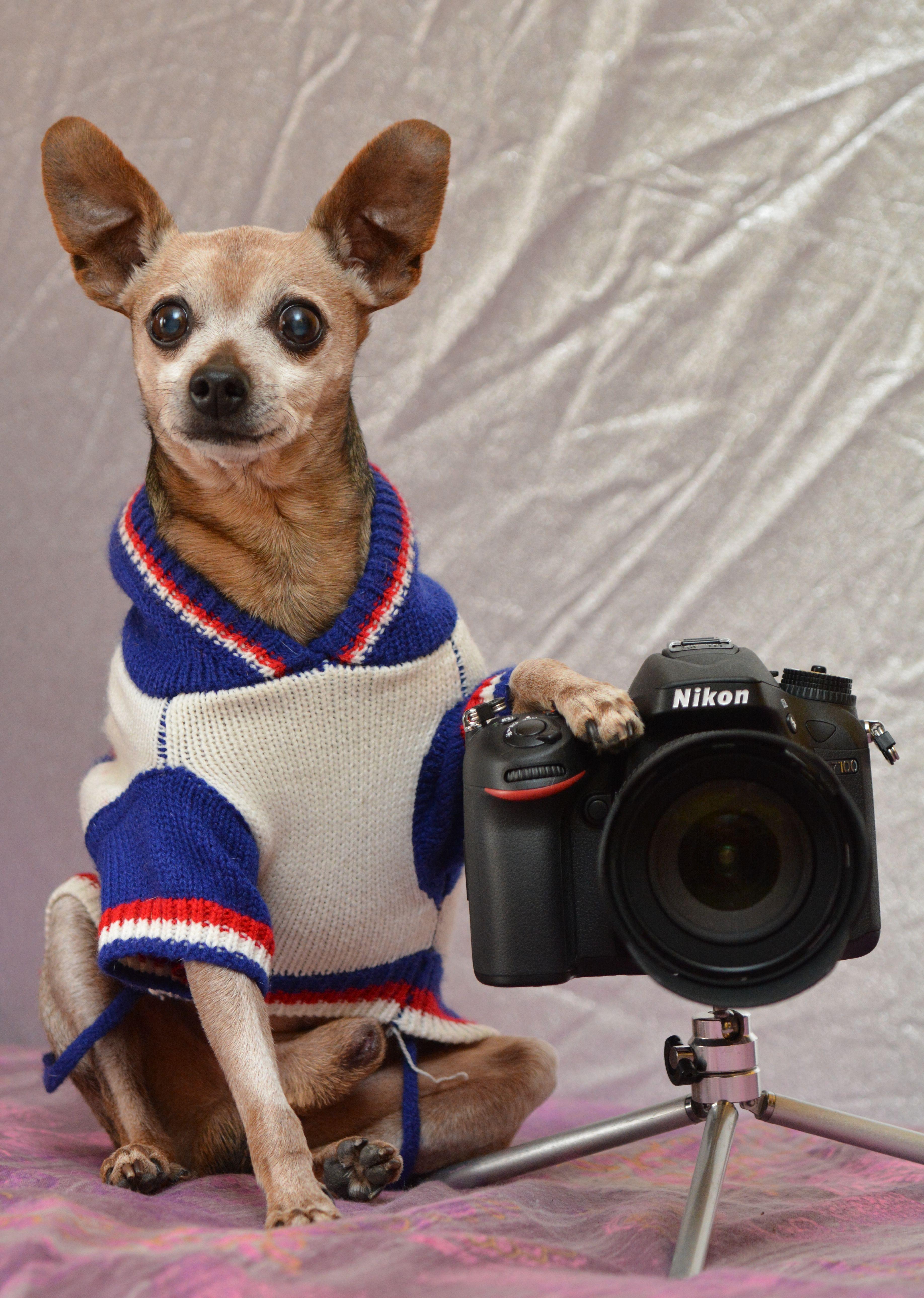 недавно узнал, конкурс фотографий домашних животных стоит думать, что