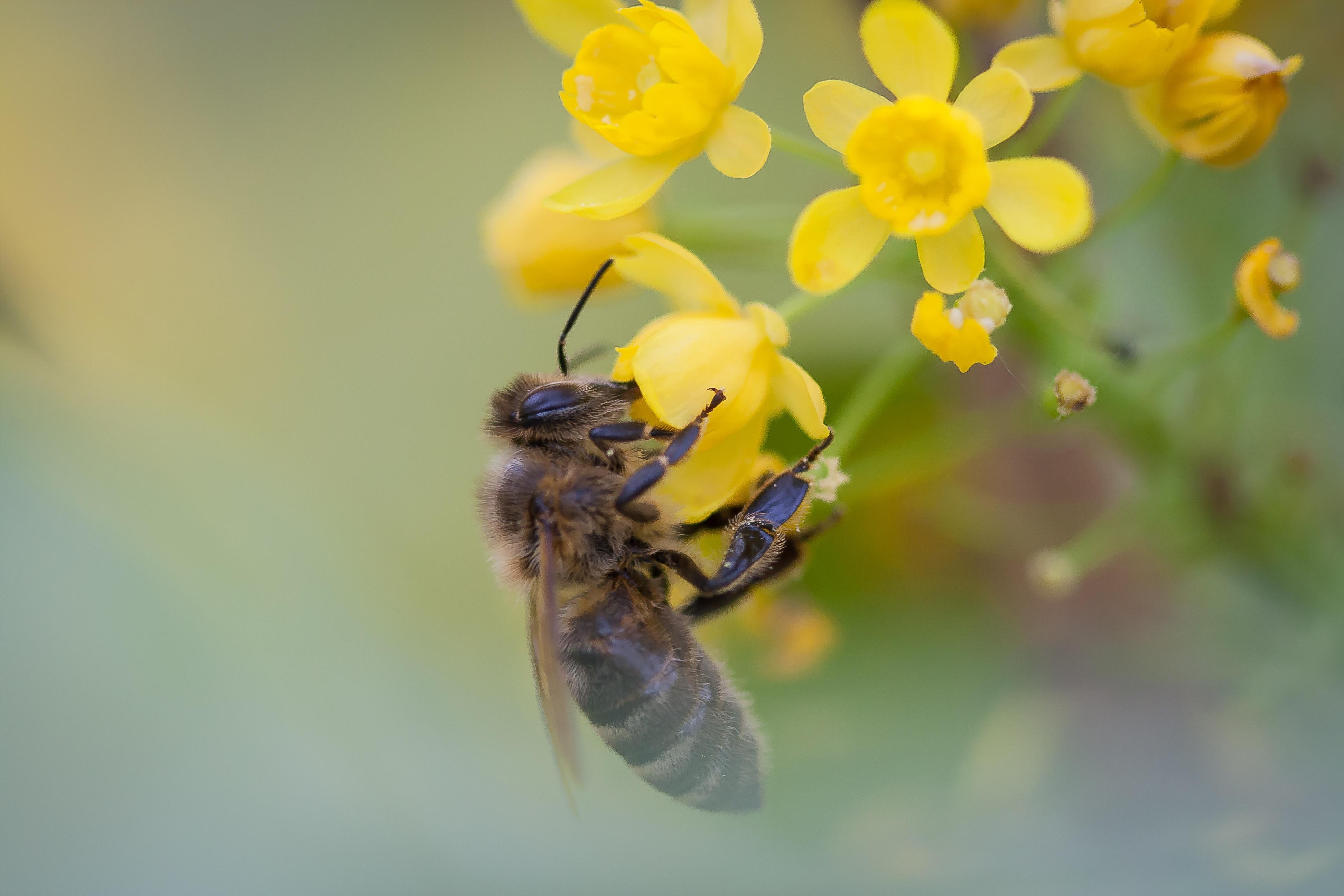 поисках картинка как пчела опыляет цветок фотографии требованиям номинациям