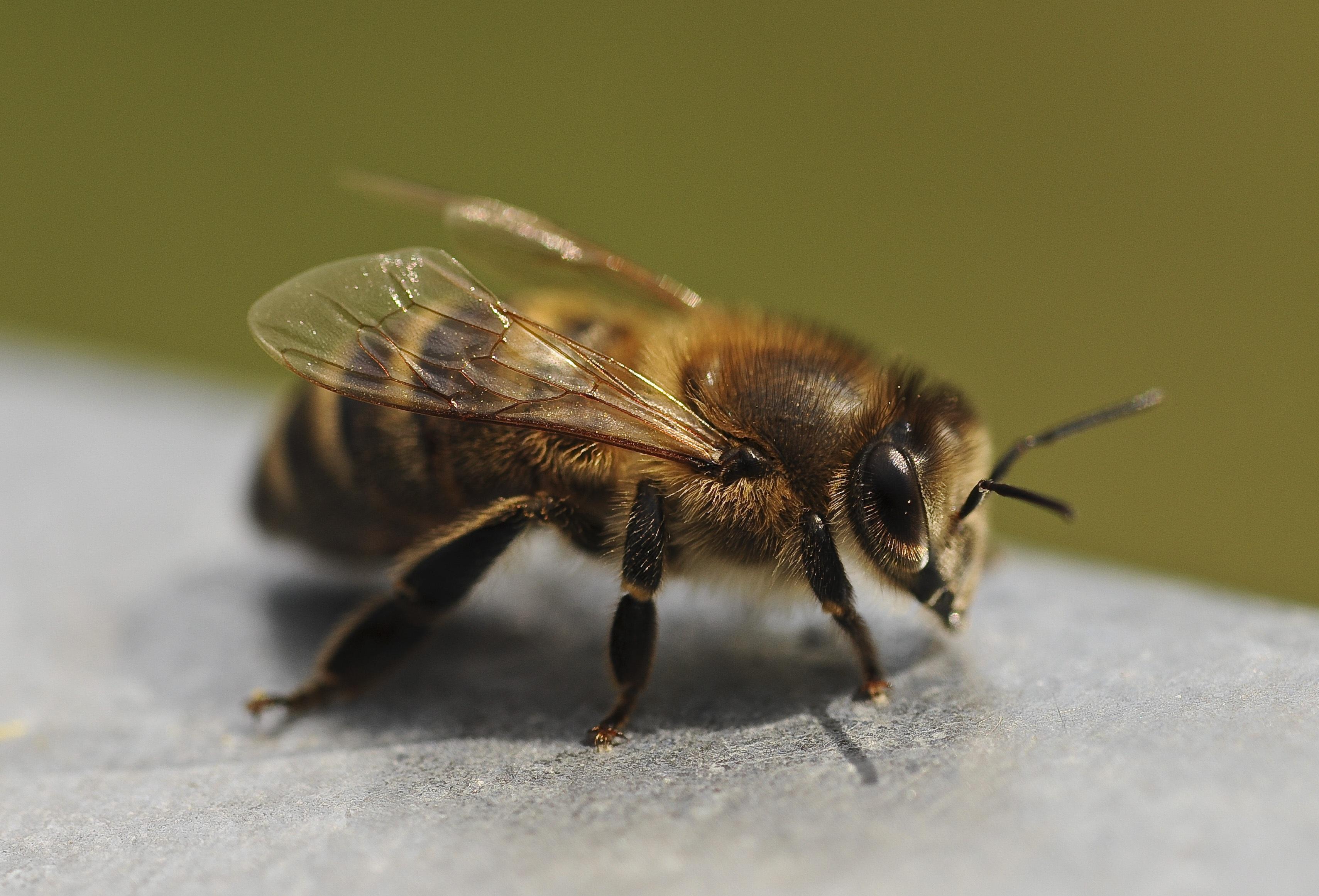 Картинки пчелы жучки мухи кружатся над