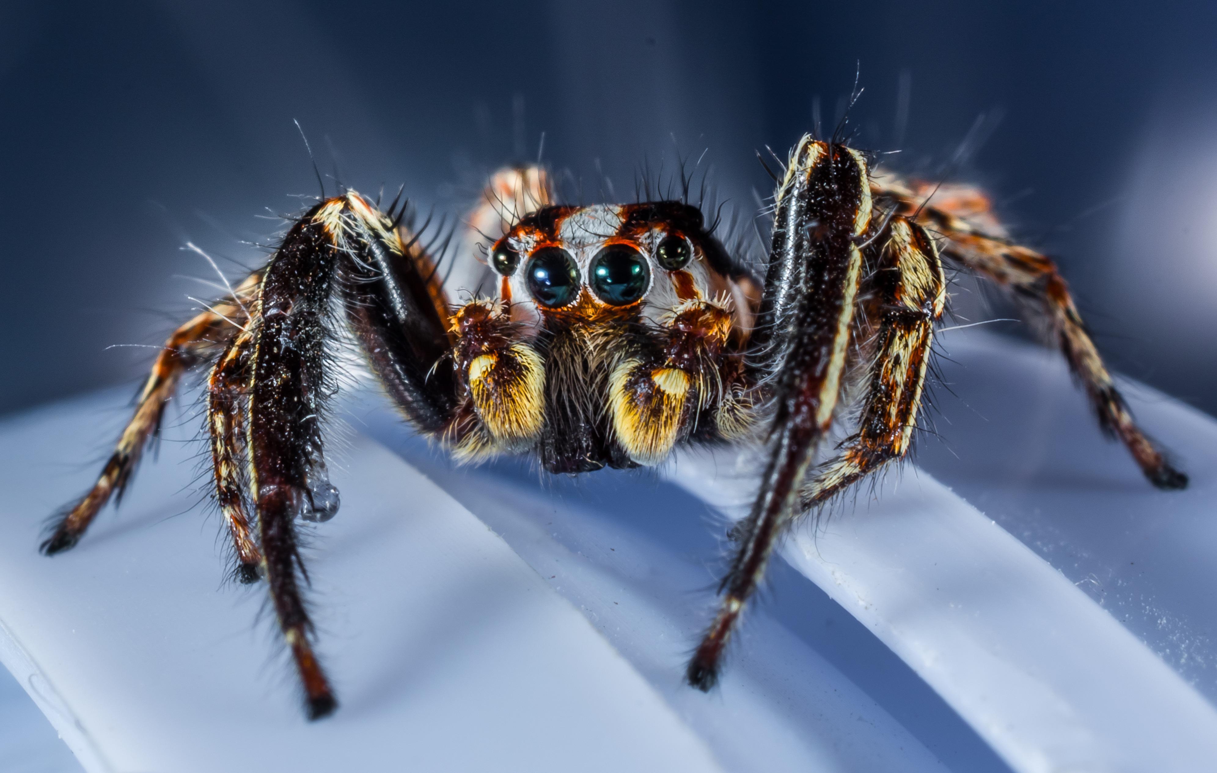 красивые названия пауков с фото спасение случае