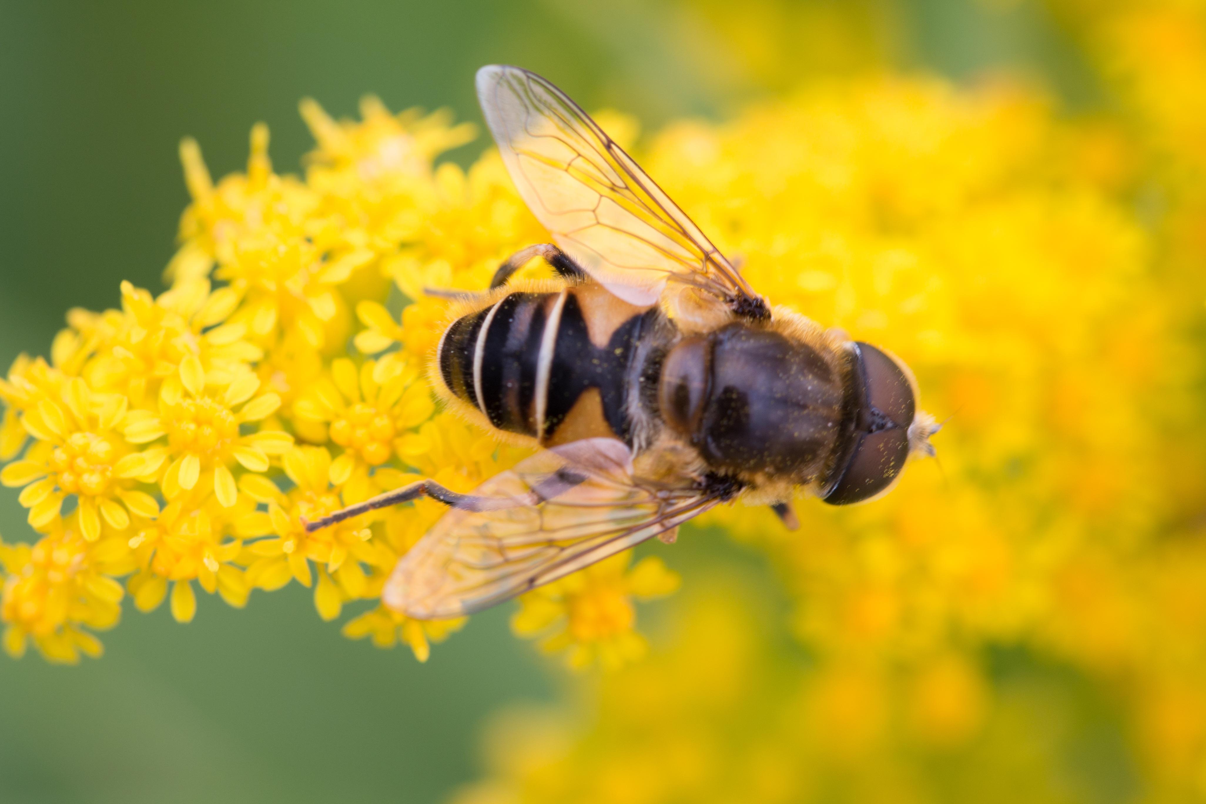 сейчас картинка яркая пчелы праздничной трапезы