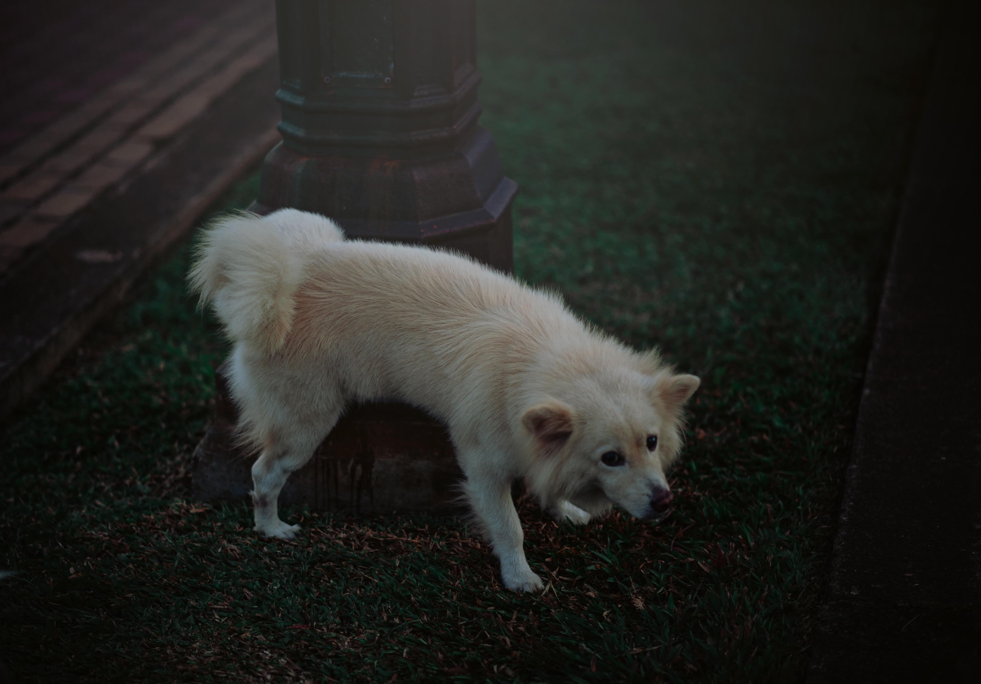 Free Images Photography Natural Animals Dog Like Mammal Dog