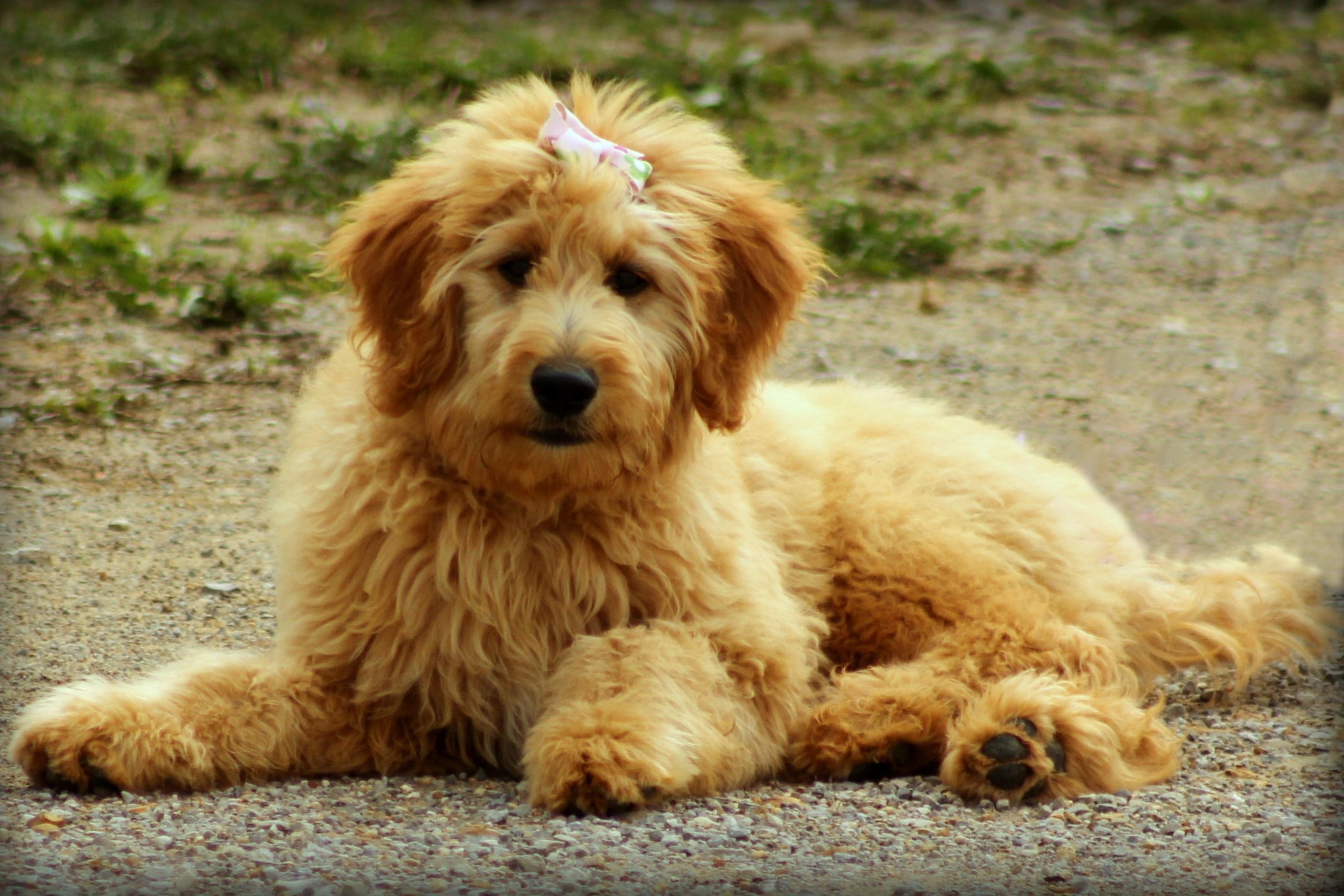 Animal Cute Canine