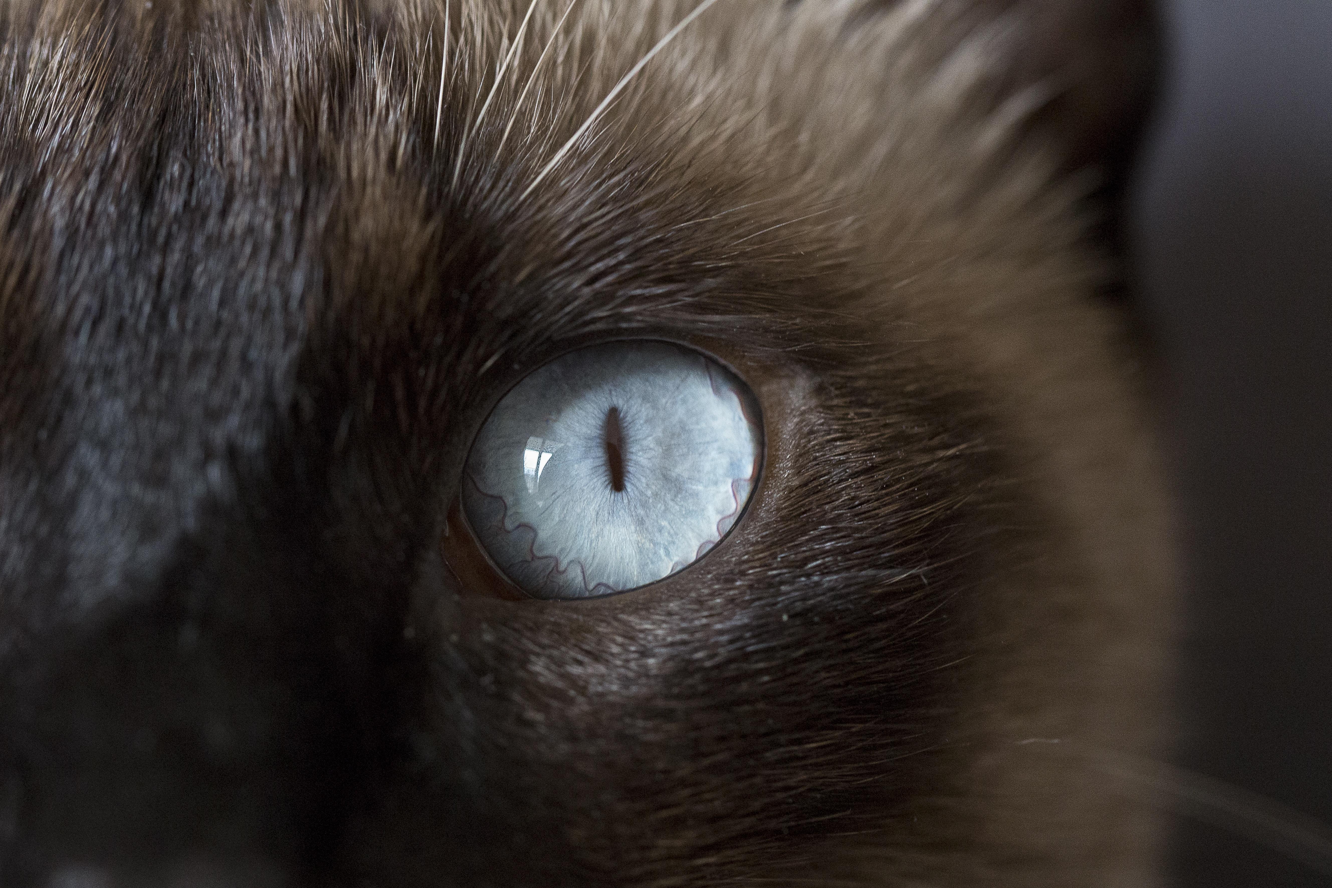 кошачьи глаза у людей картинки