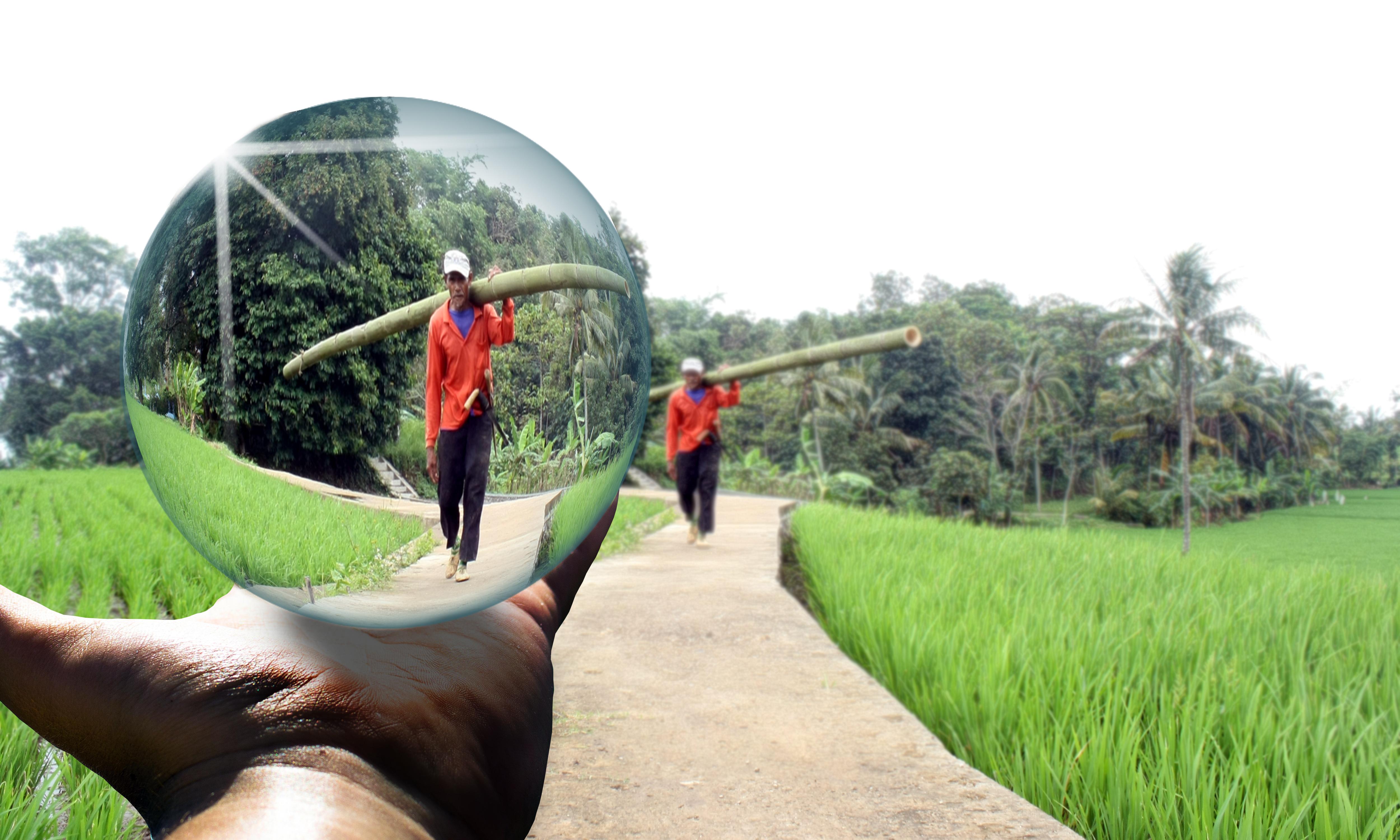 Gambar Photoshop Seni Waktu Luang Bidang Daerah Pedesaan Pohon