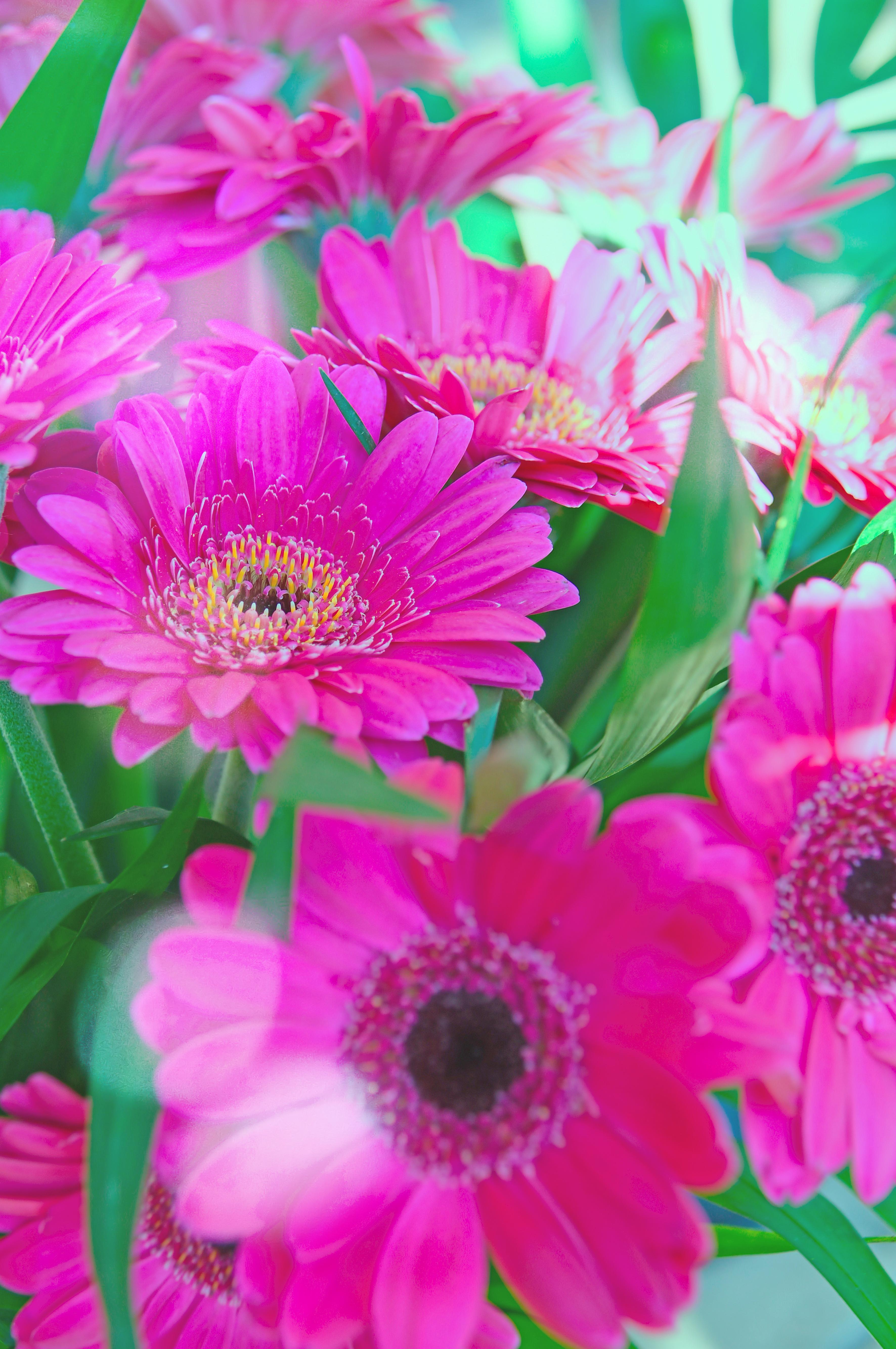banco de imagens rosa outono fundo flor bonita natureza beleza verde colorida plantar estao flor flores vero fechar se branco fresco