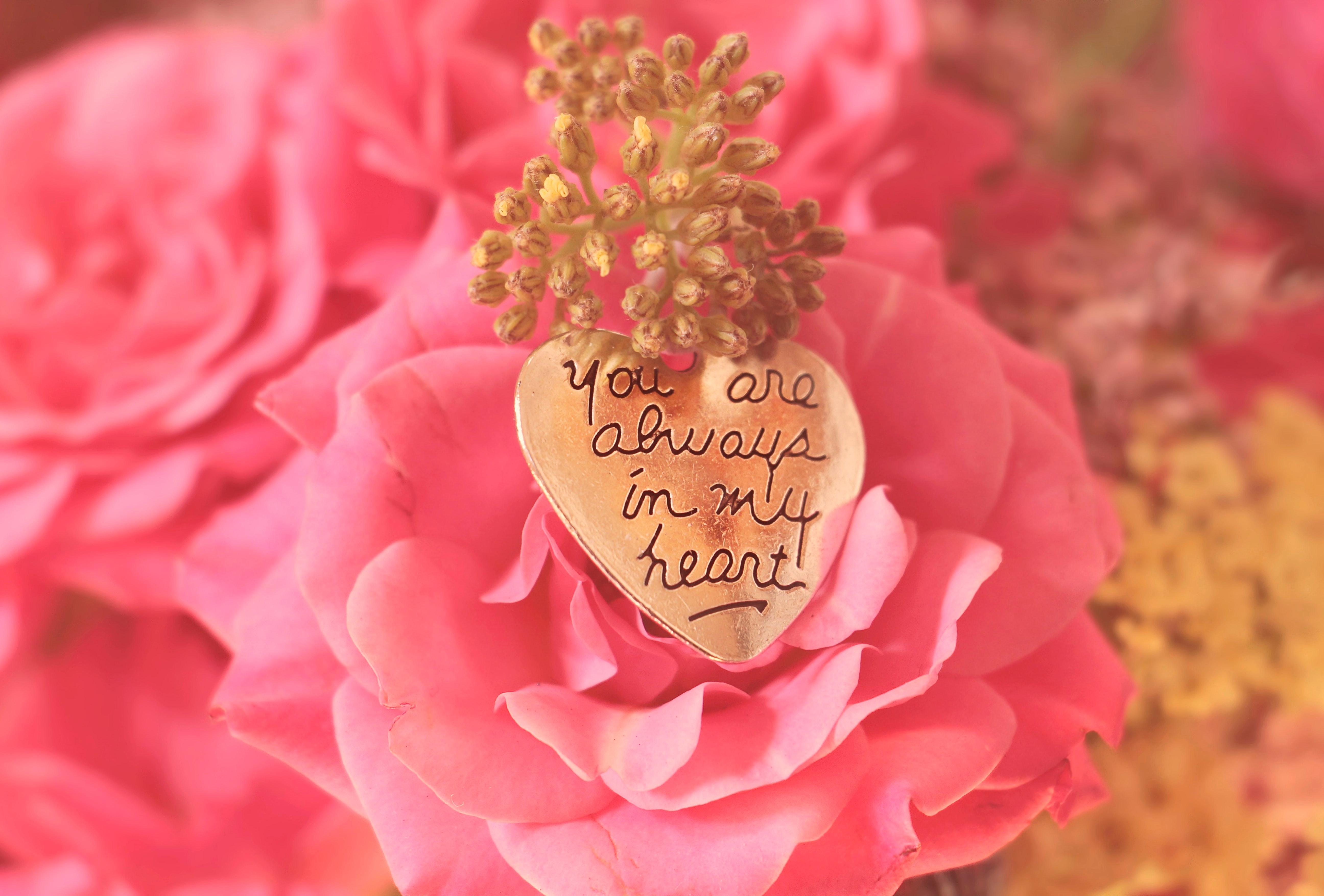 Free Images Petal Rose Family Garden Roses Floristry