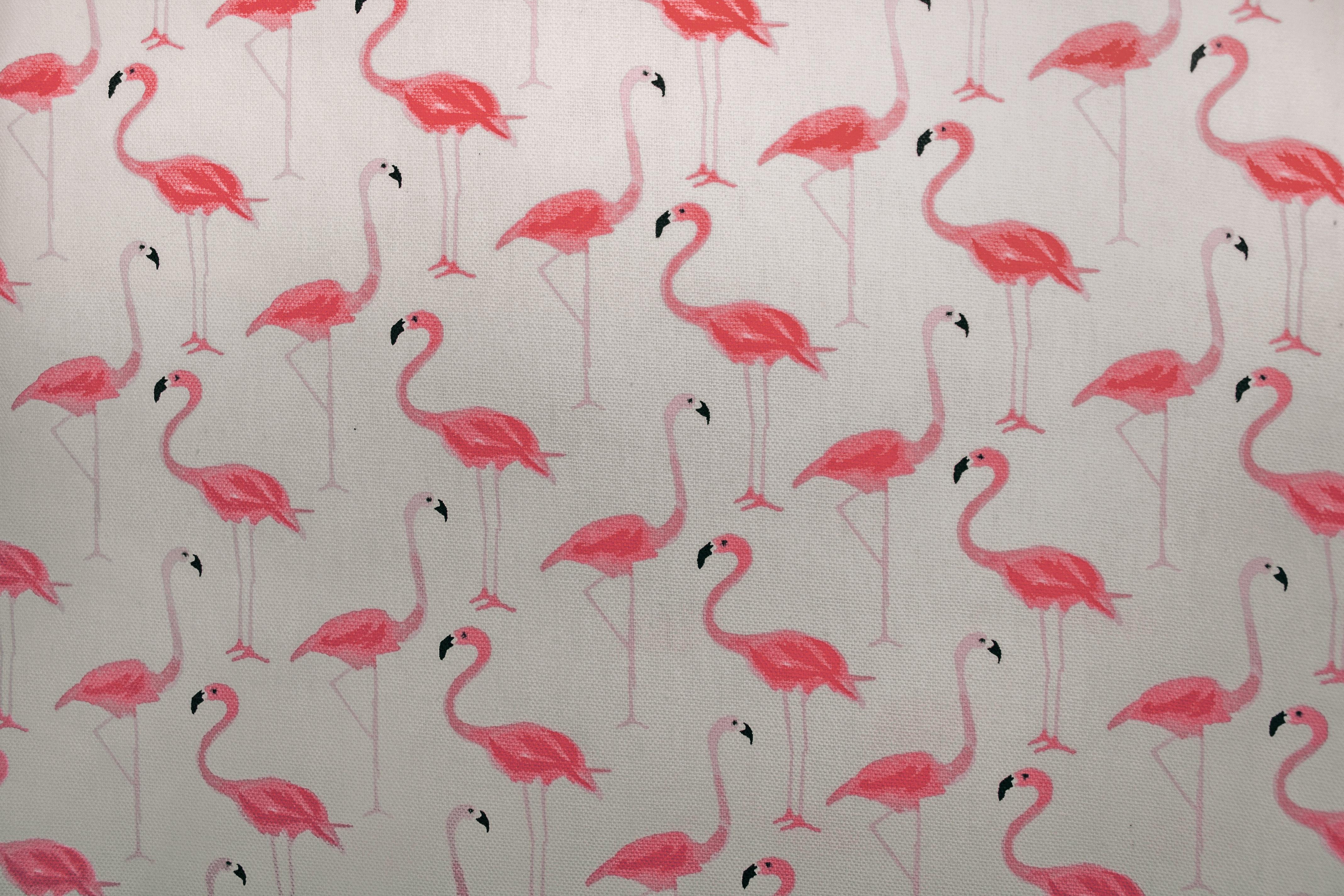 Gambar Berwarna Merah Muda Flamingo Burung Air Daun Bunga