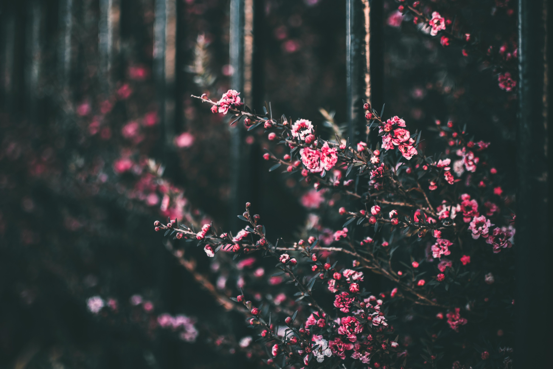 Красивые картинки цветы тумблер