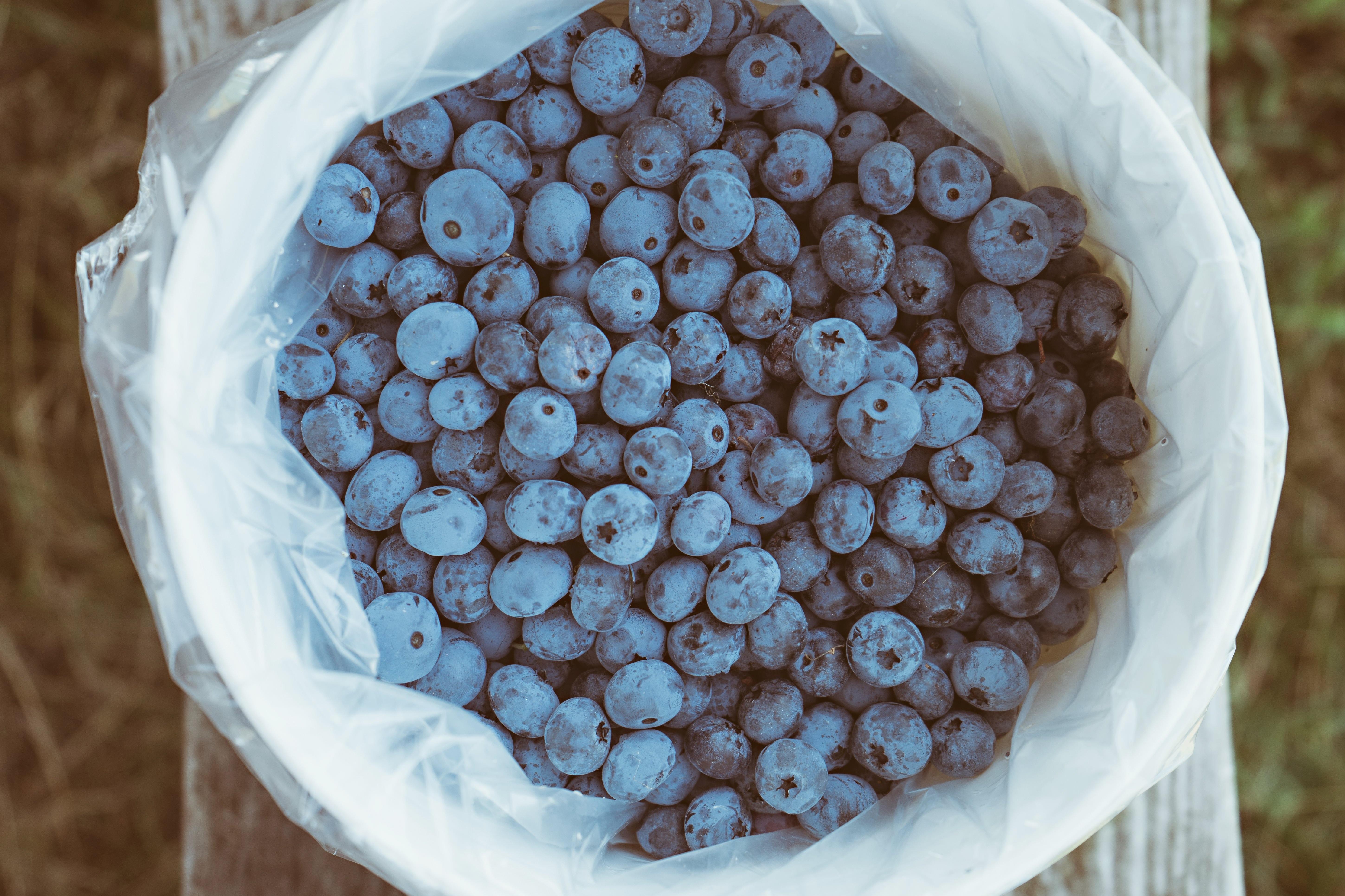 Gratis billeder : plante, bænk, frugt, bær, fremstille, kurv, sund ...