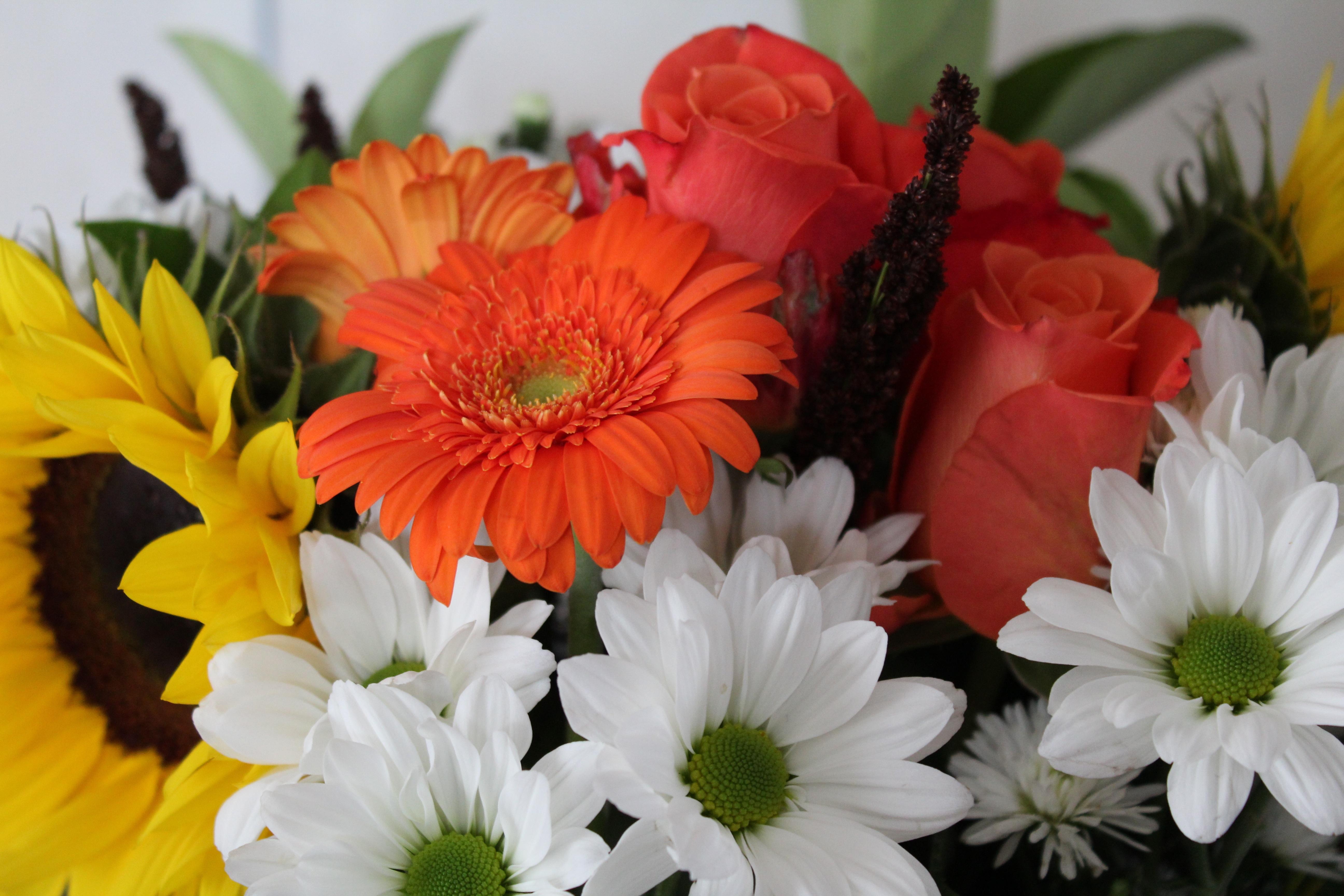 Images gratuites fleur p tale cadeau flore gerbera for Bouquet de fleurs 974